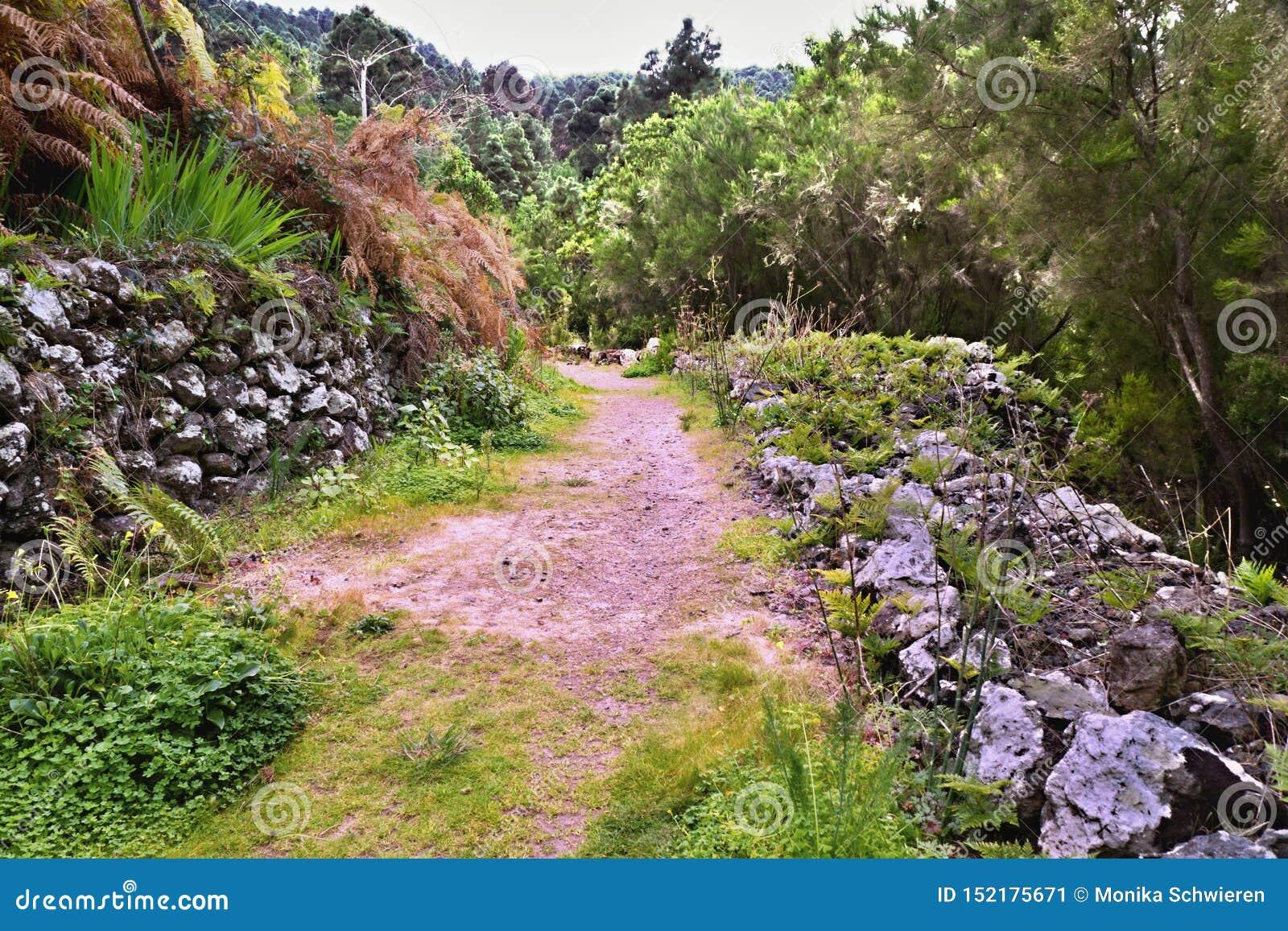 Wanderweg auf teneriffa auf Monte Frio eine Flechte-bedeckte alte Steinwand
