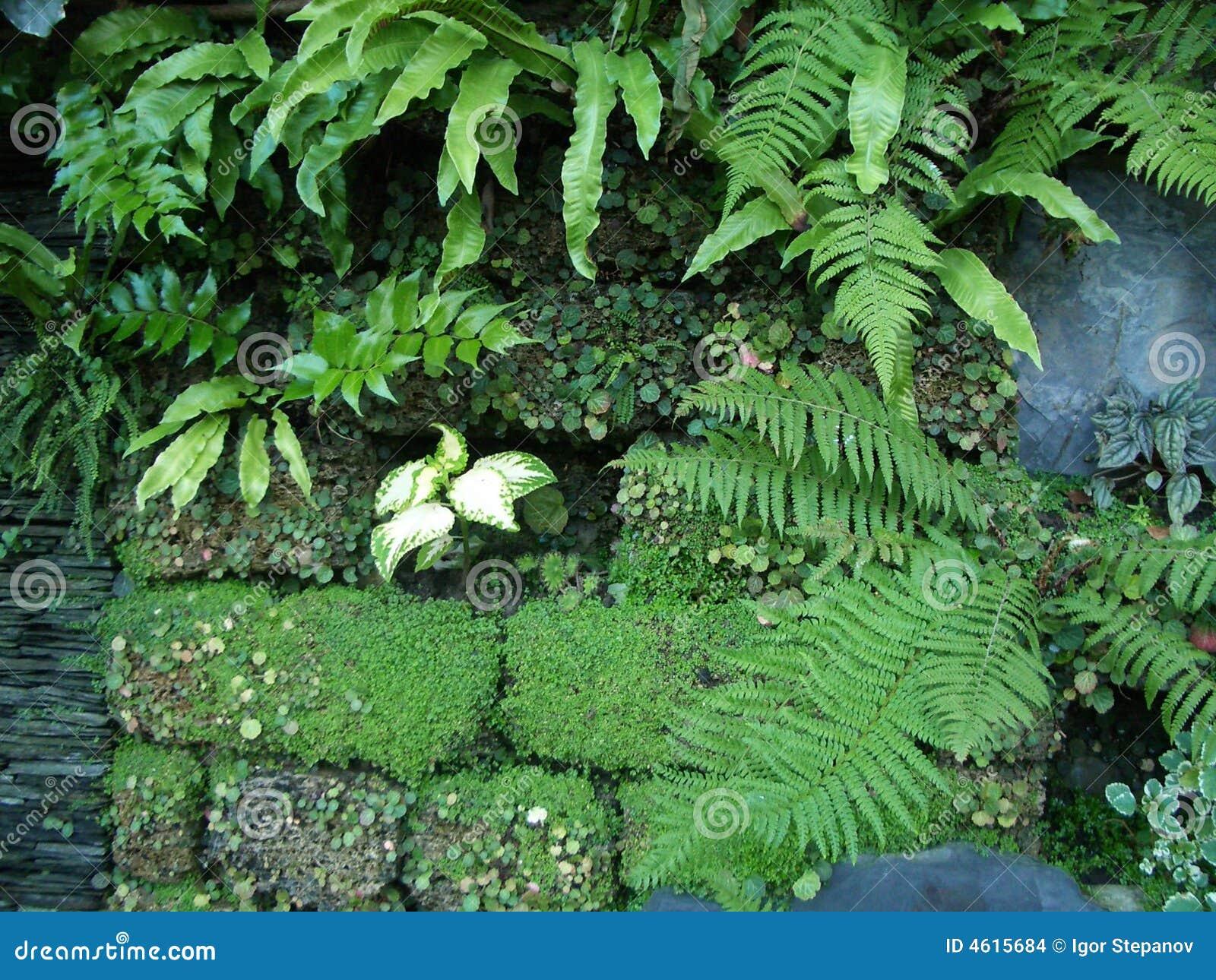 wandgarten von sochi stockbilder bild 4615684. Black Bedroom Furniture Sets. Home Design Ideas