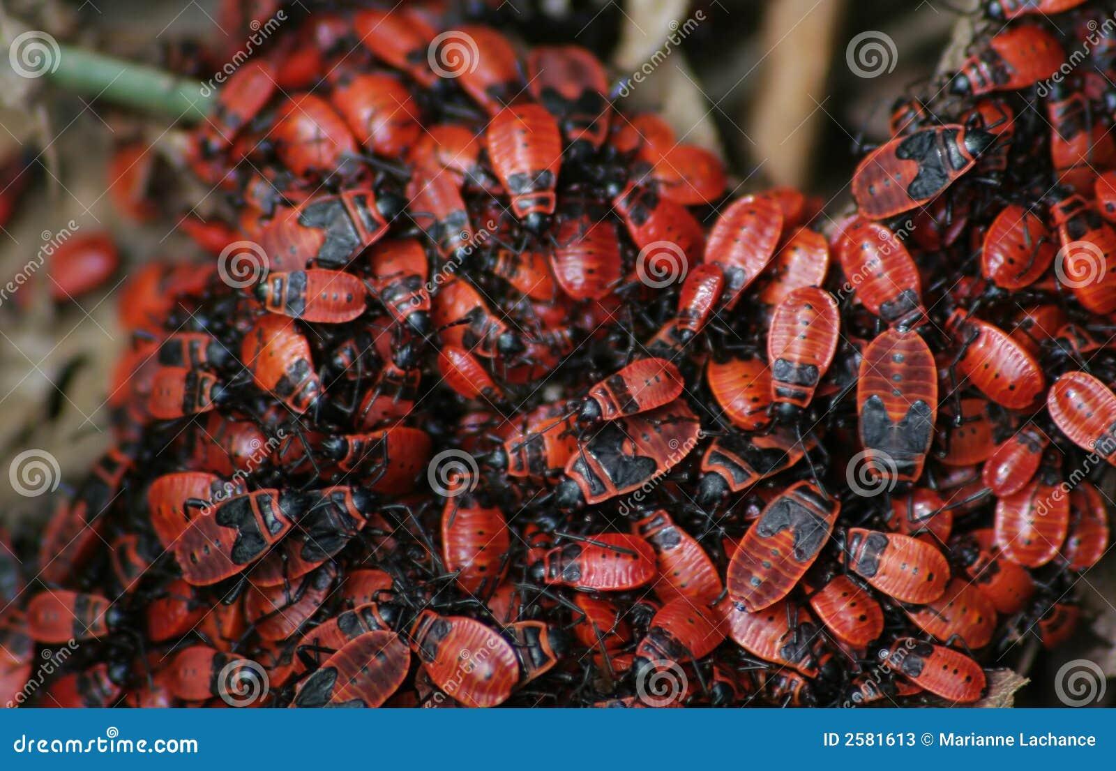 Ware Insecten