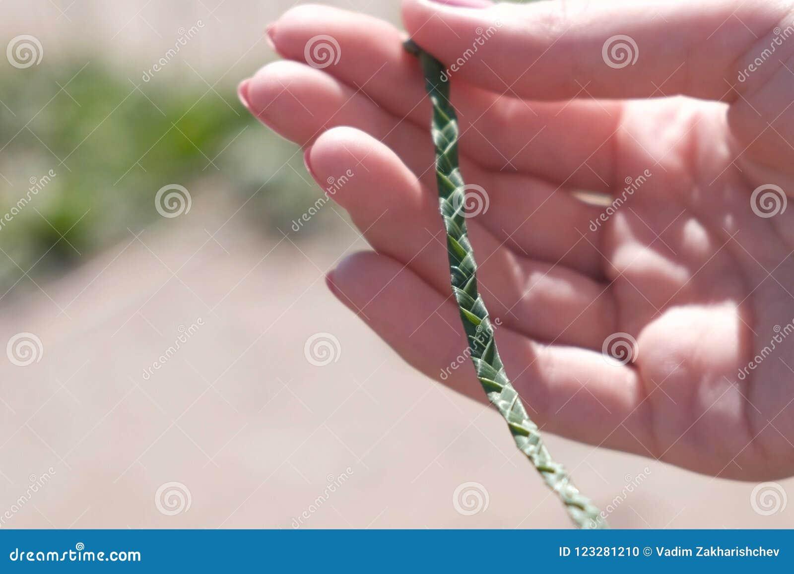 Warkocz od liści w kobiety ` s ręce plenerowej