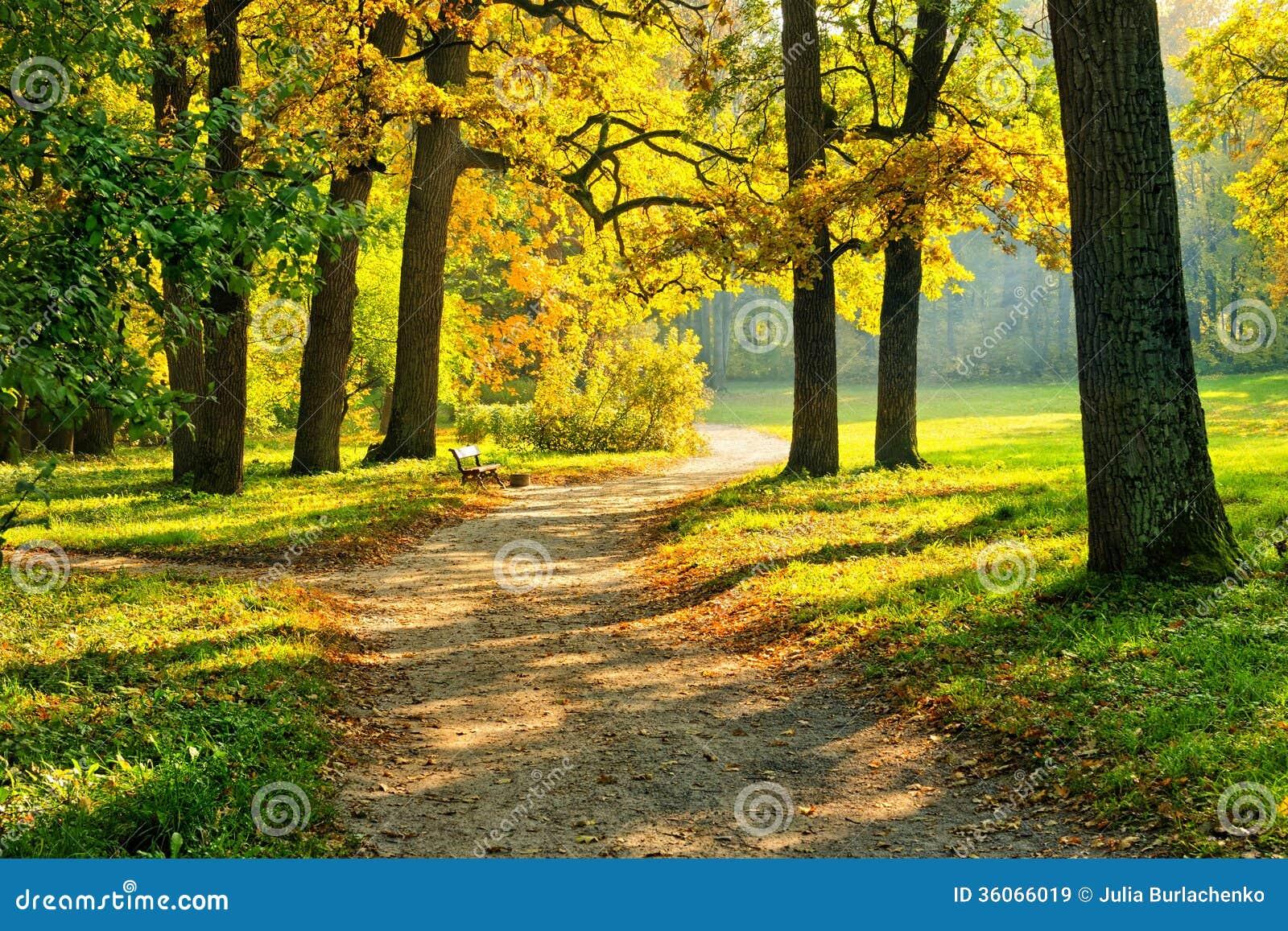 Autumn In The Park Forest. Vivid Golden Yellow Orange