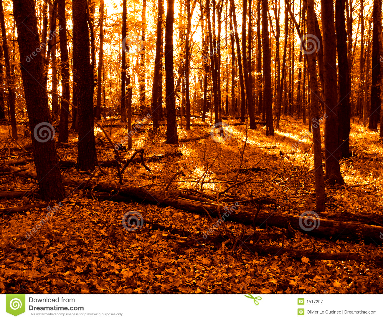 Royalty Free Stock Photography: Warm Colors Woods and Fall Leaves in ...: www.dreamstime.com/royalty-free-stock-photography-warm-colors-woods...