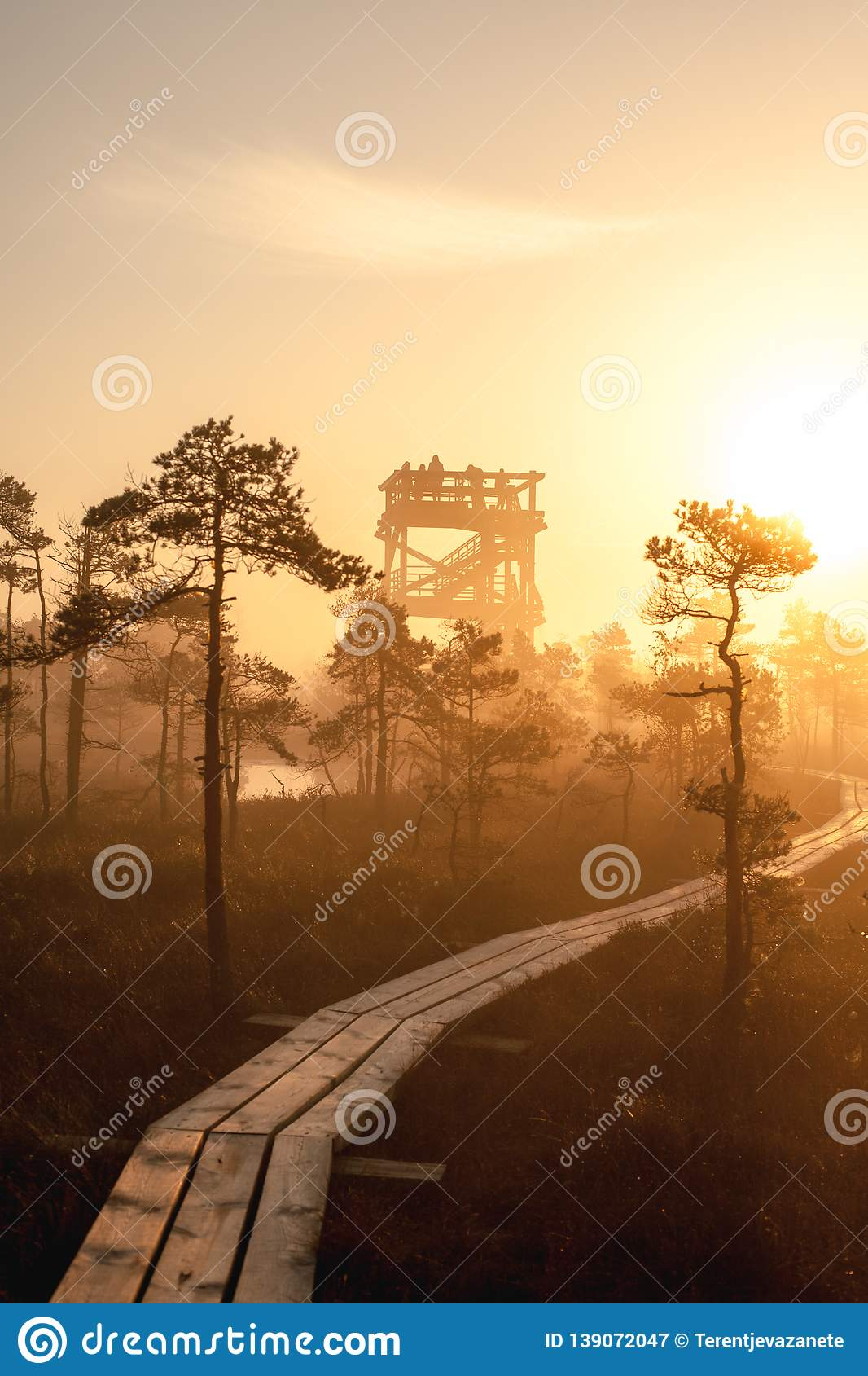 Warm sunrise at a swamp covered in fog. Sunshine beats through the thick mist with tree silhouettes and a path at Kemeri National