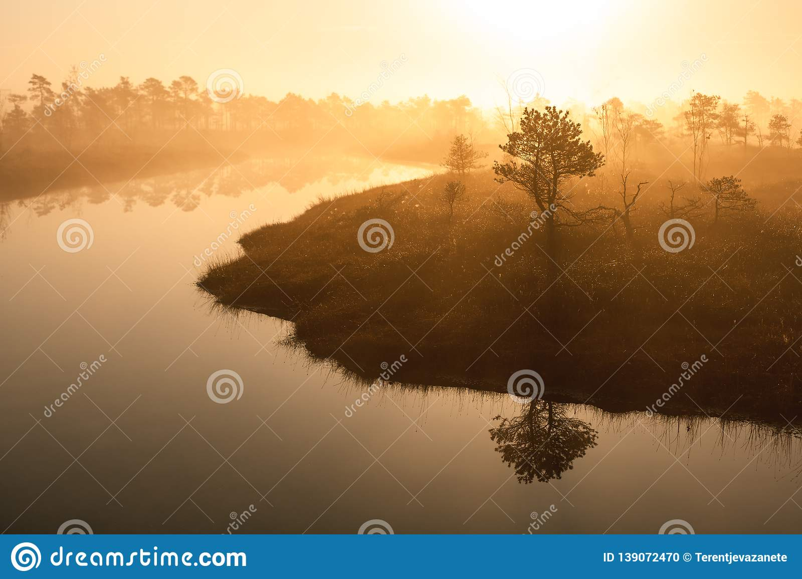 Warm sunrise at a swamp covered in fog. Sunshine beats through the thick mist with tree silhouettes and a view tower at Kemeri Nat