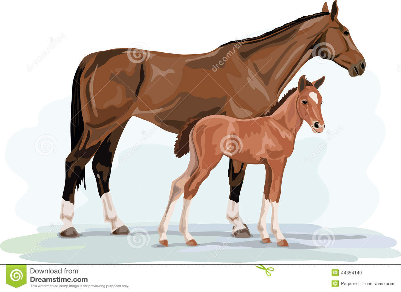 Warmblood horse mare and foal standing stock vector for Clipart mare