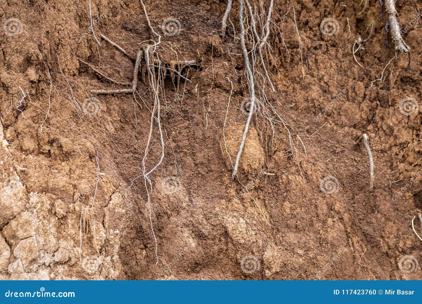 Warstwy ziemia moczą glebowych korzenie w glebowych glebowego profilu ziemi strefach
