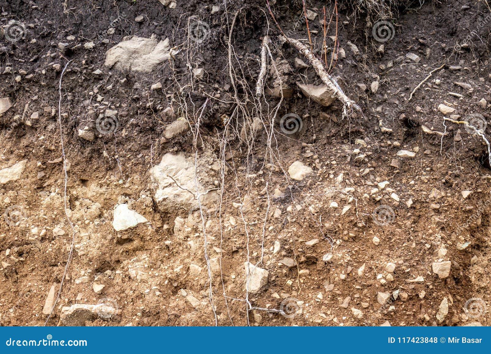 Warstwy ziemia moczą glebowych korzenie w glebowym glebowego profilu ziemi stref ro
