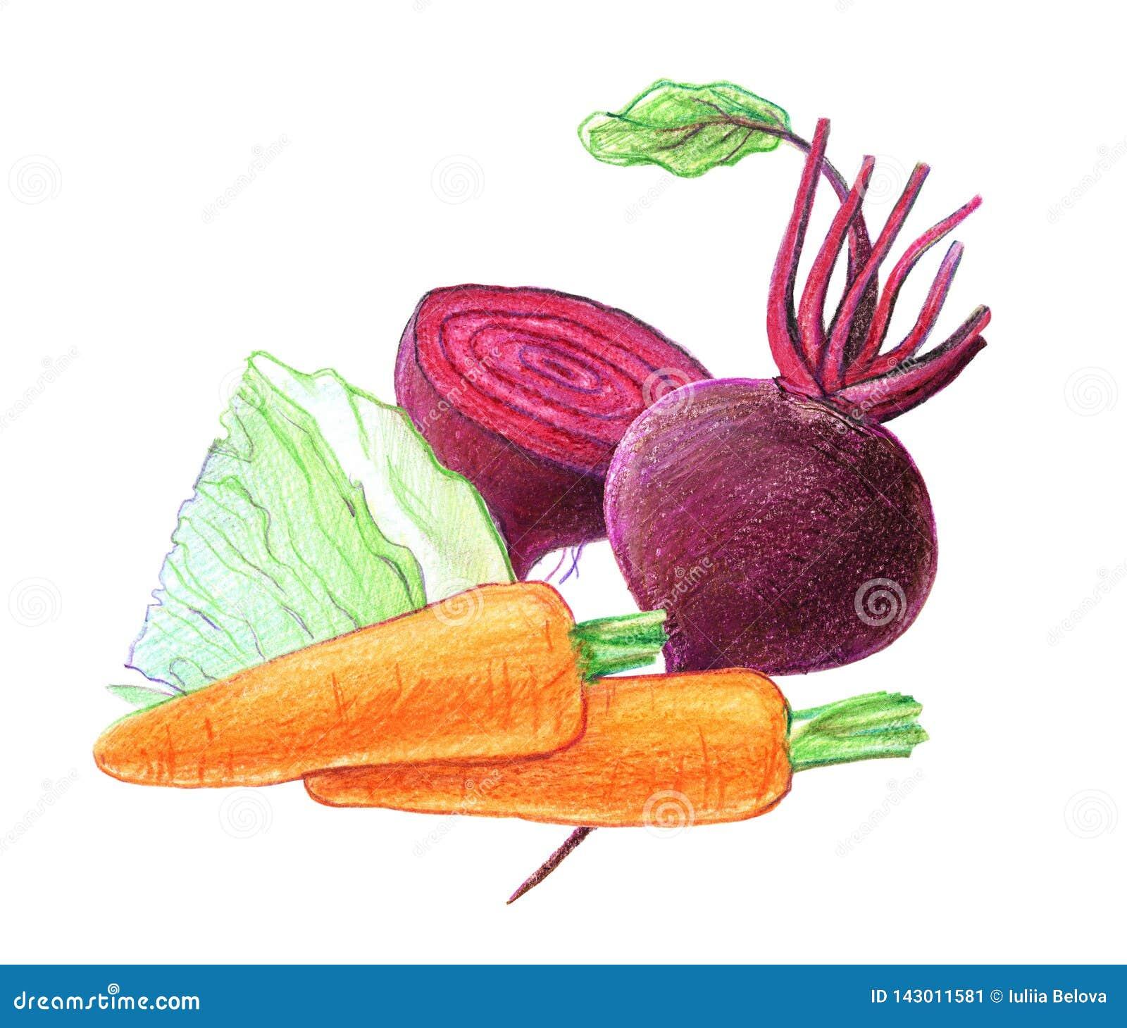 Warzywa i korzeniowi warzywa Buraki, kapusta, marchewki Całość w cięciu i Graficzny rysunek z barwionymi o??wkami Odizolowywaj?cy