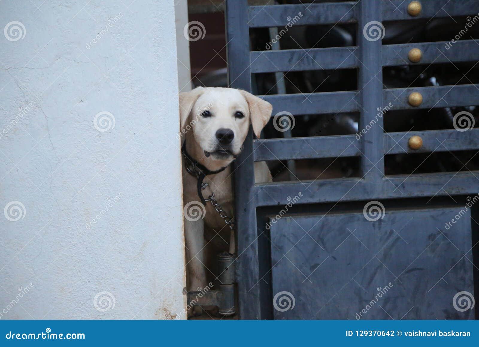 A dog next door