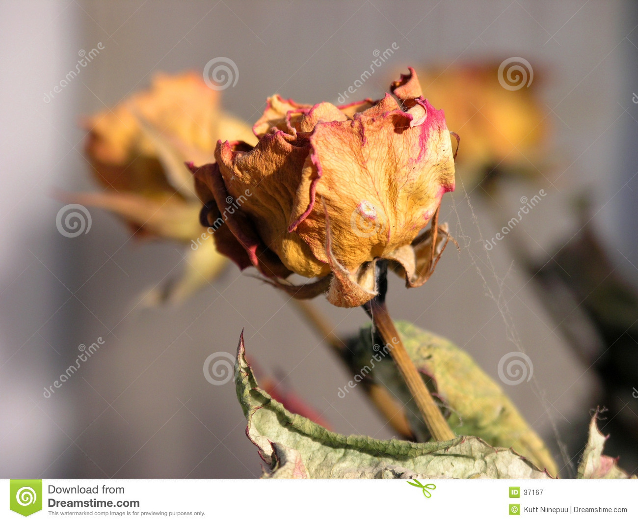 Was a rose...