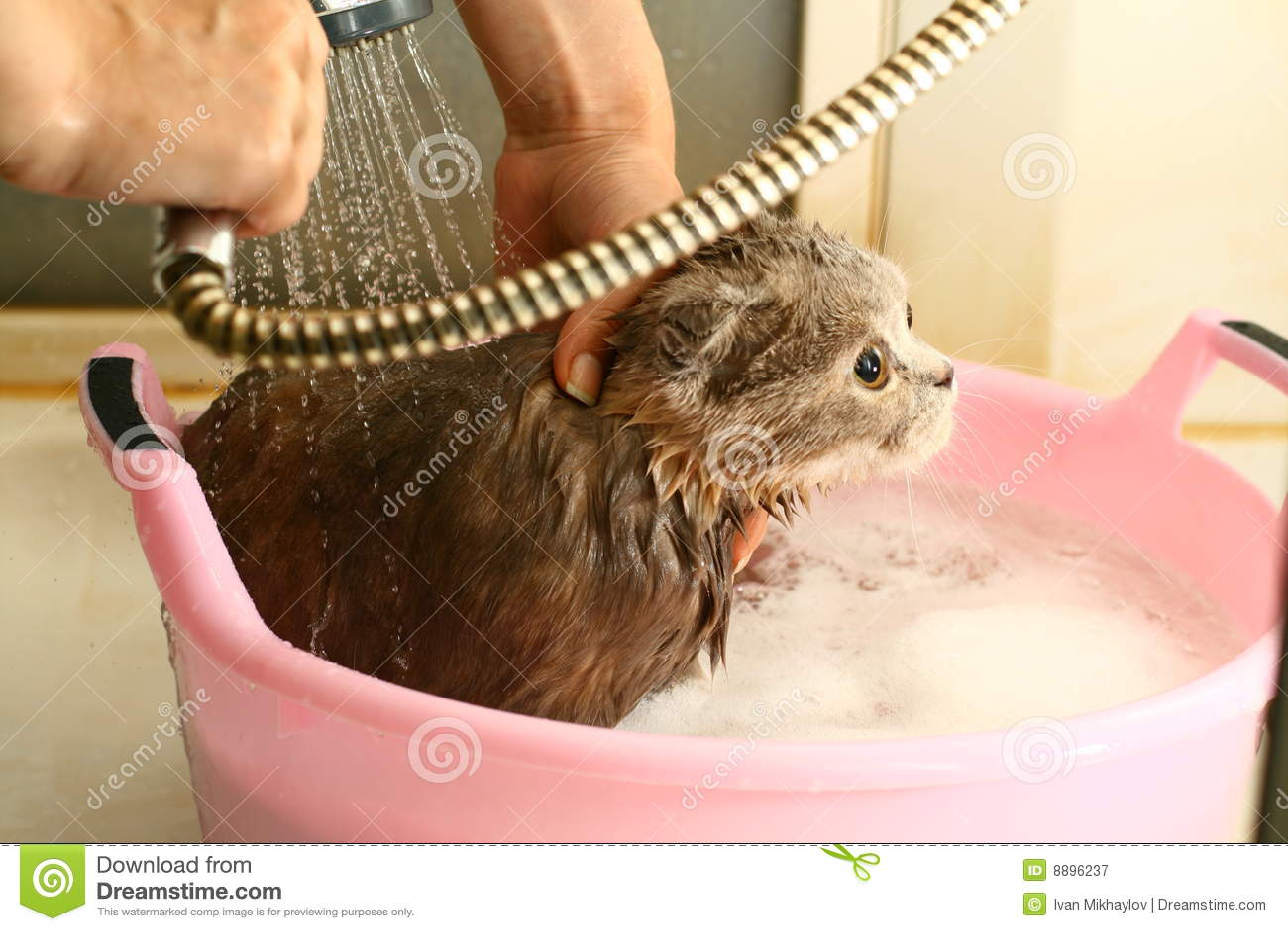 Wash Cat Royalty Free Stock Photography Image 8896237