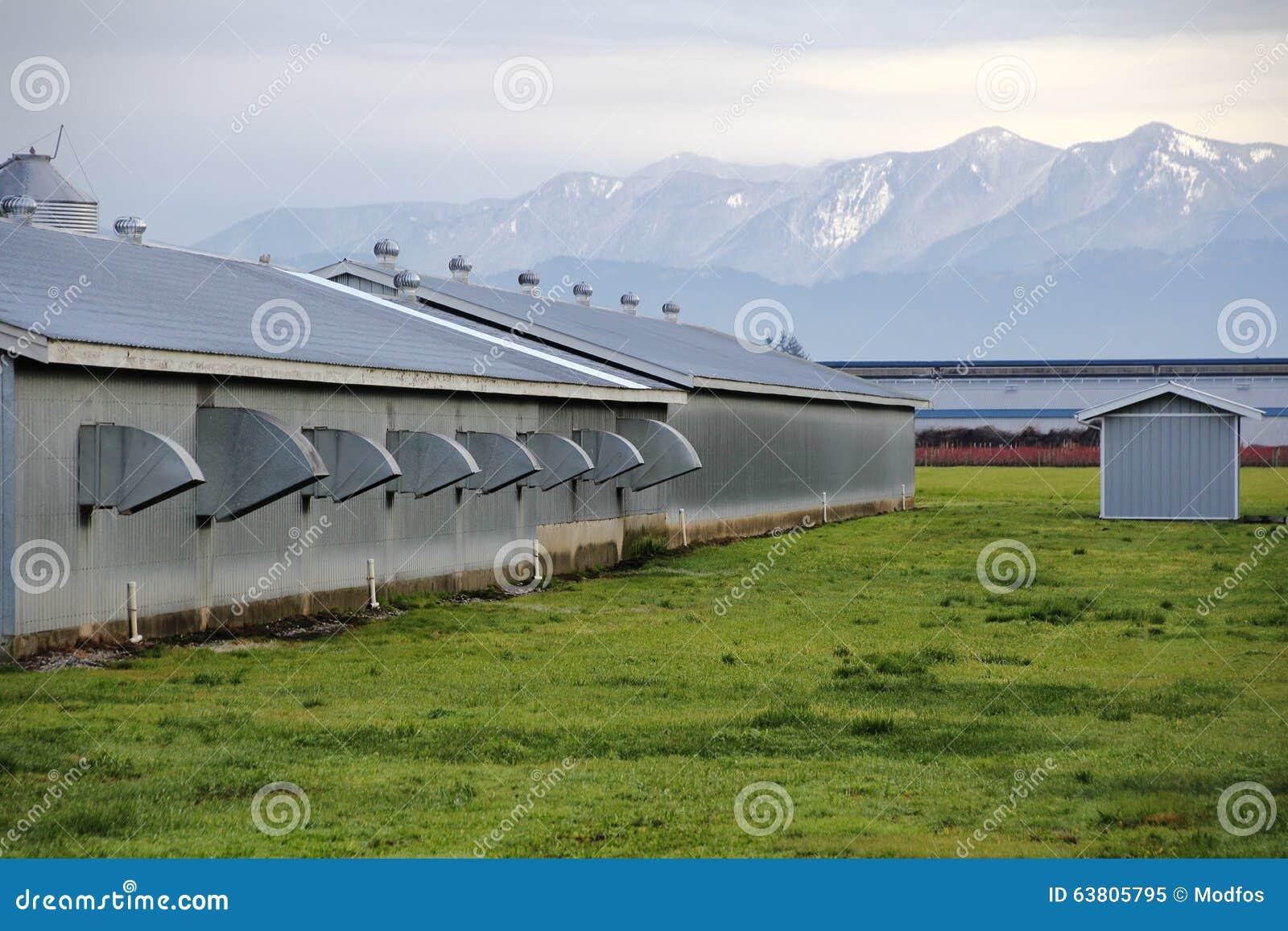 ^ Washington hicken Farm Stock Photo - Image: 63805795
