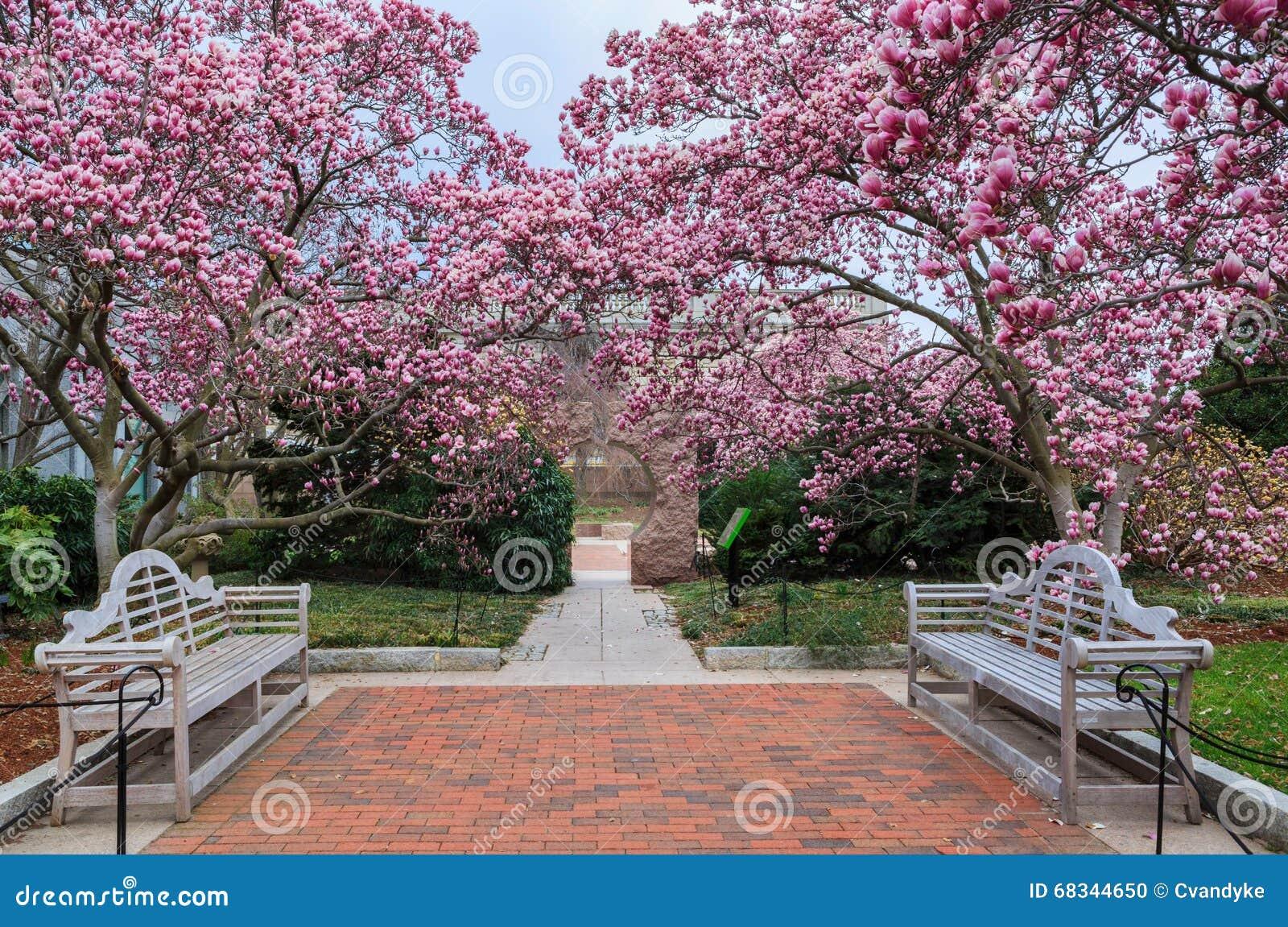 Washington Dc Magnolia Garden Spring Stock Photo Image Of Garden