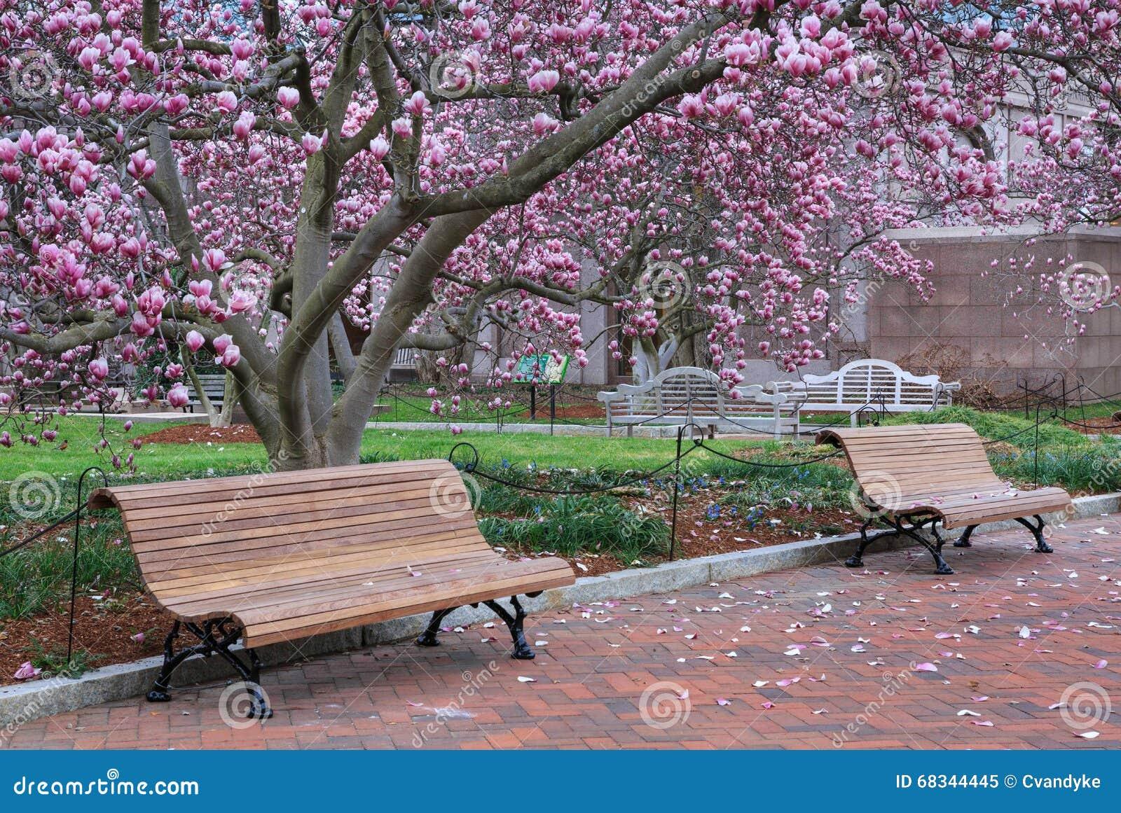 Washington Dc Park Benches Magnolia Trees Stock Image Image Of
