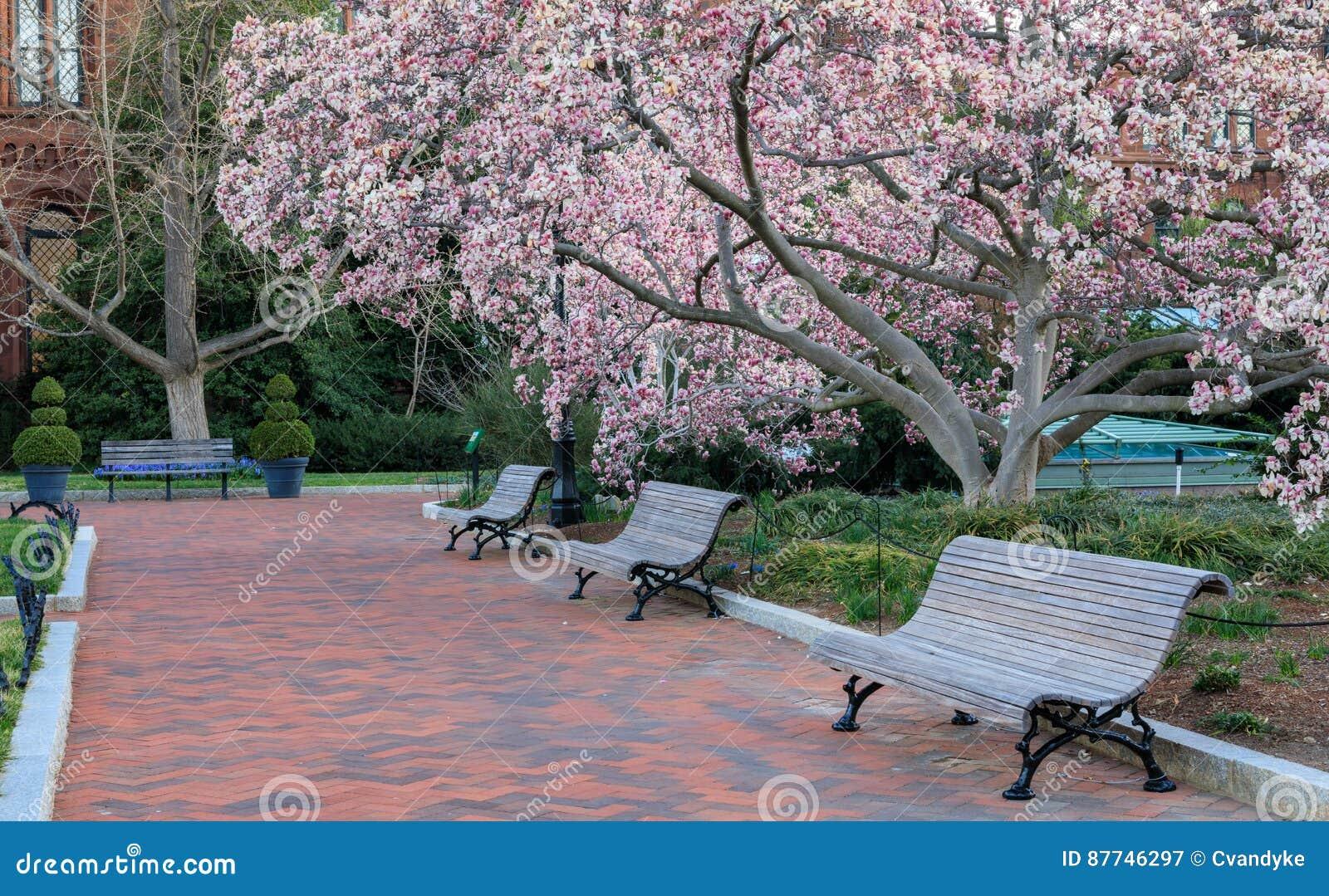 Washington Dc Sidewalk Spring Bloom Stock Image Image Of Magnolia