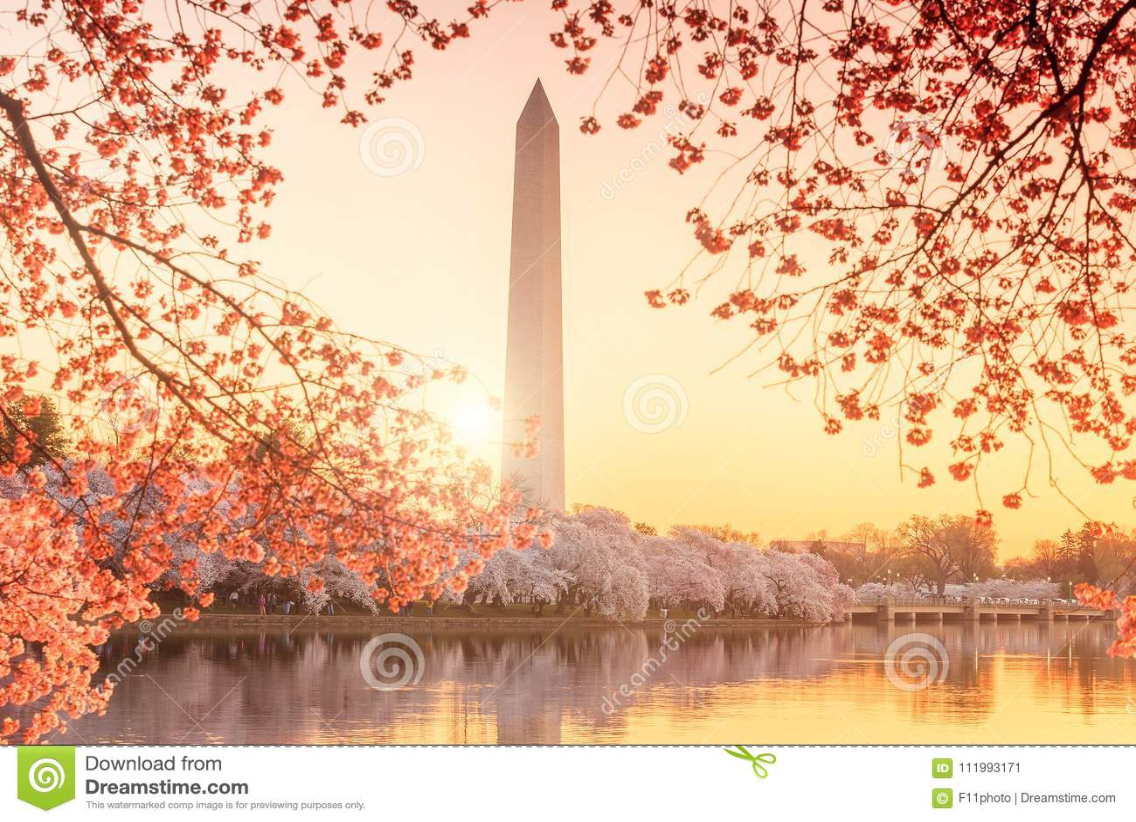 Washington Monument under Cherry Blossom Festival