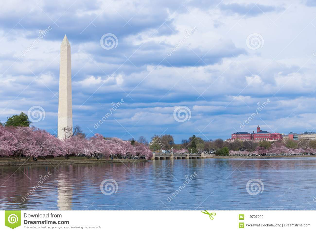 Washington Monument under Cherry Blossom Festival på den tidvattens- handfatet, Washington DC