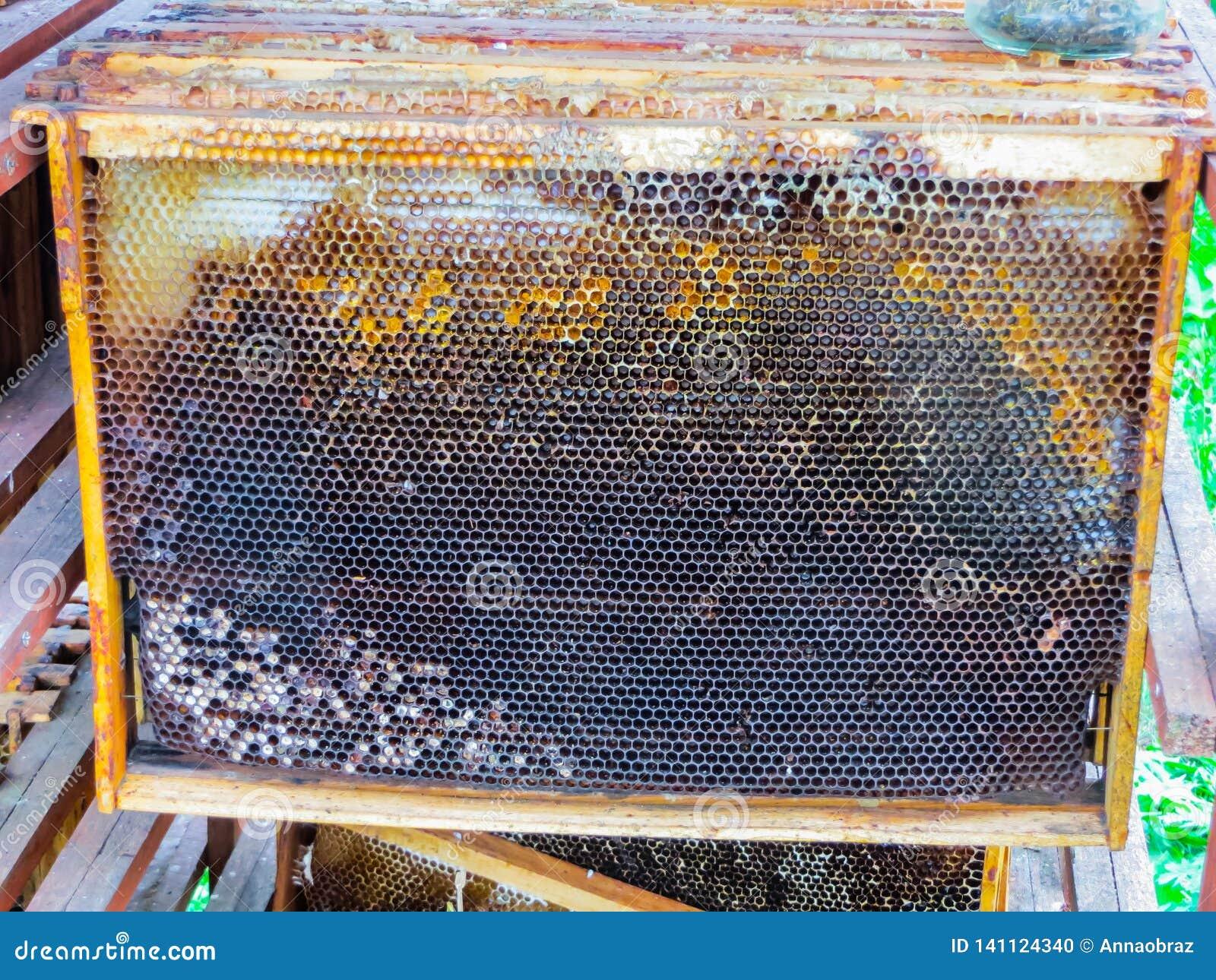 Waskaders na het pompen van honing van hen