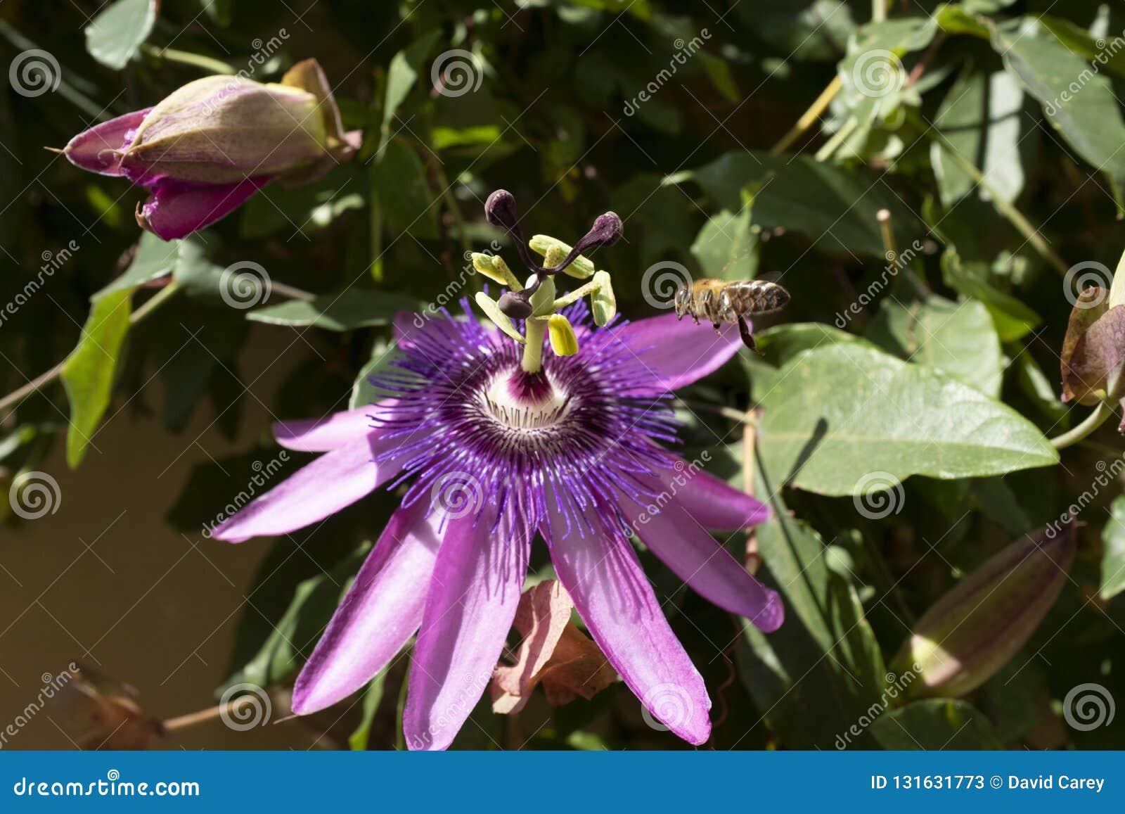 Wasp överskrift in i en blomma som samlar pollen