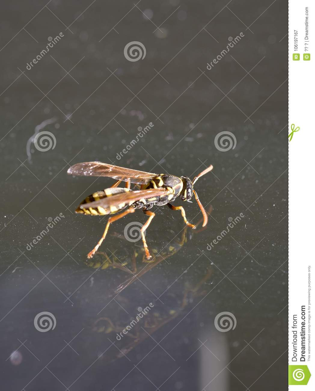 A wasp flying into the room