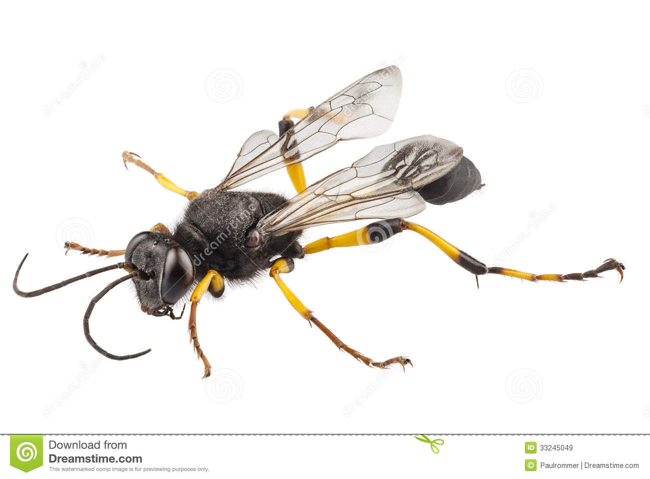 Displaying 20 gt images for black and yellow mud dauber