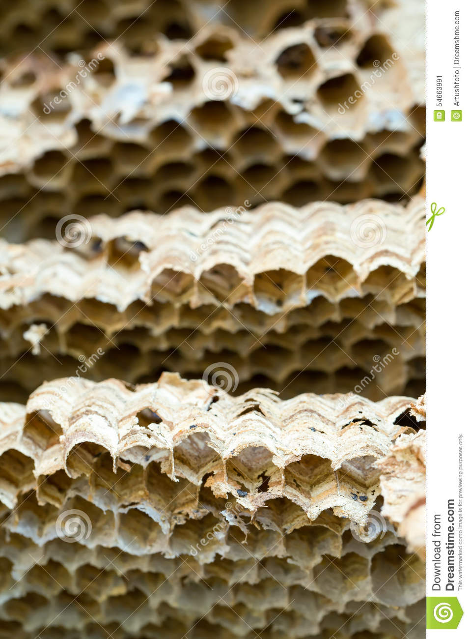 Wasp nest background