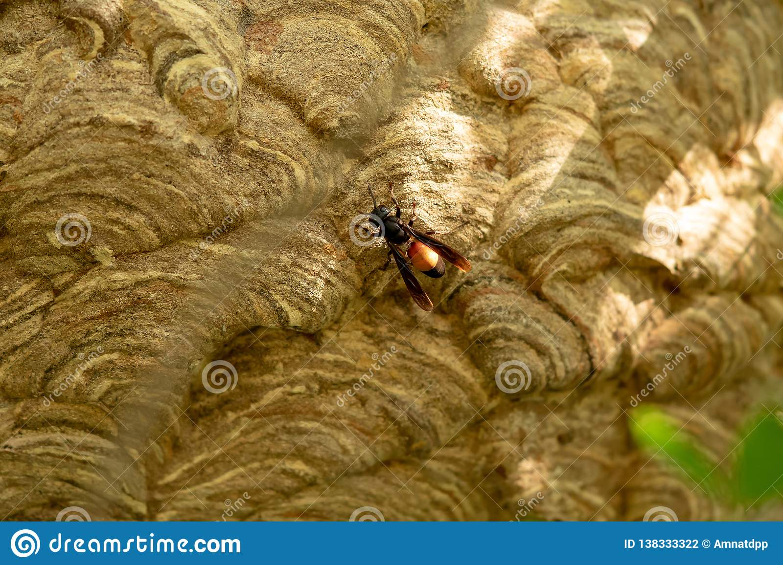 Wasp nest on green tree