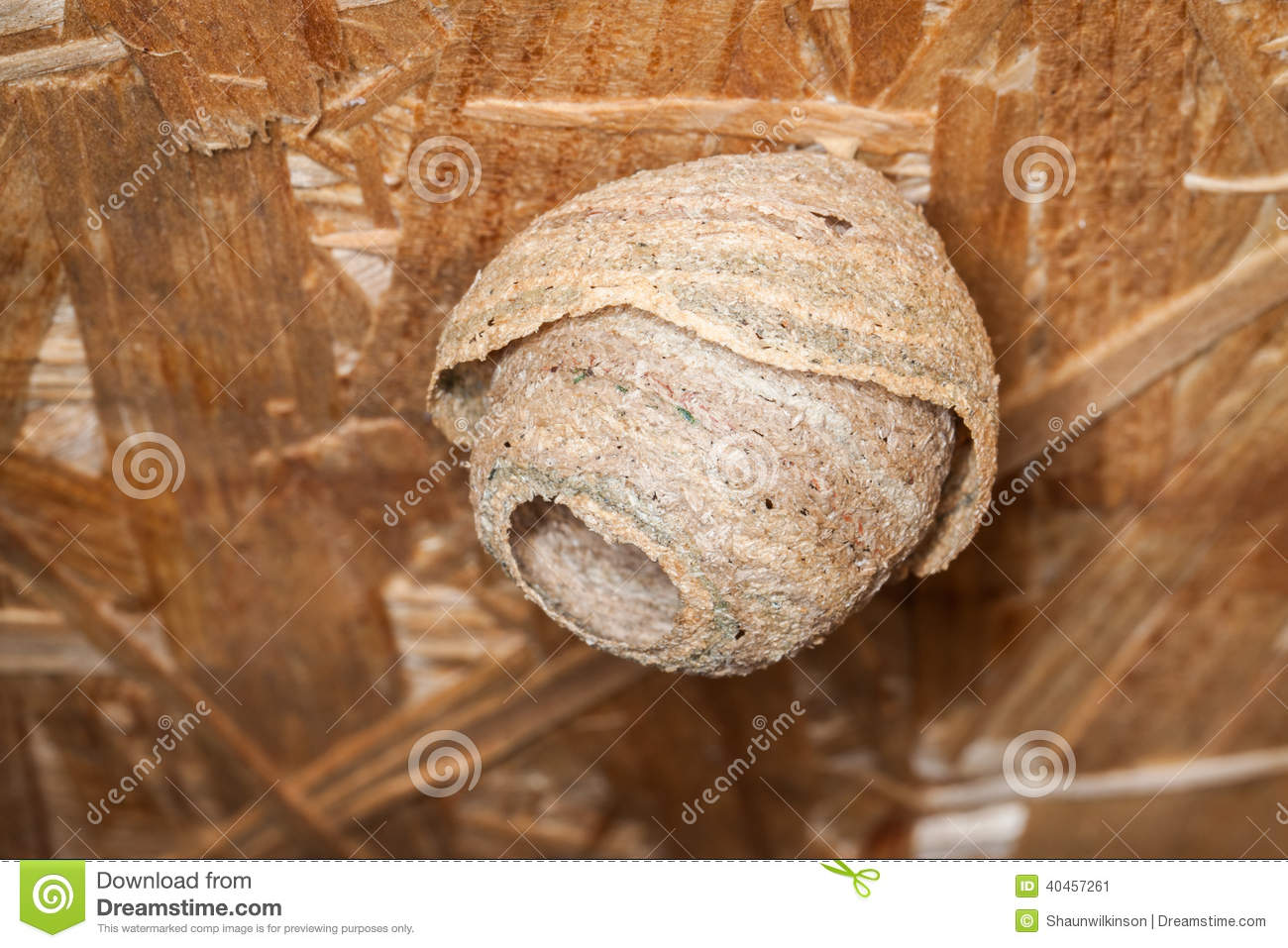 how to kill a small wasps nest