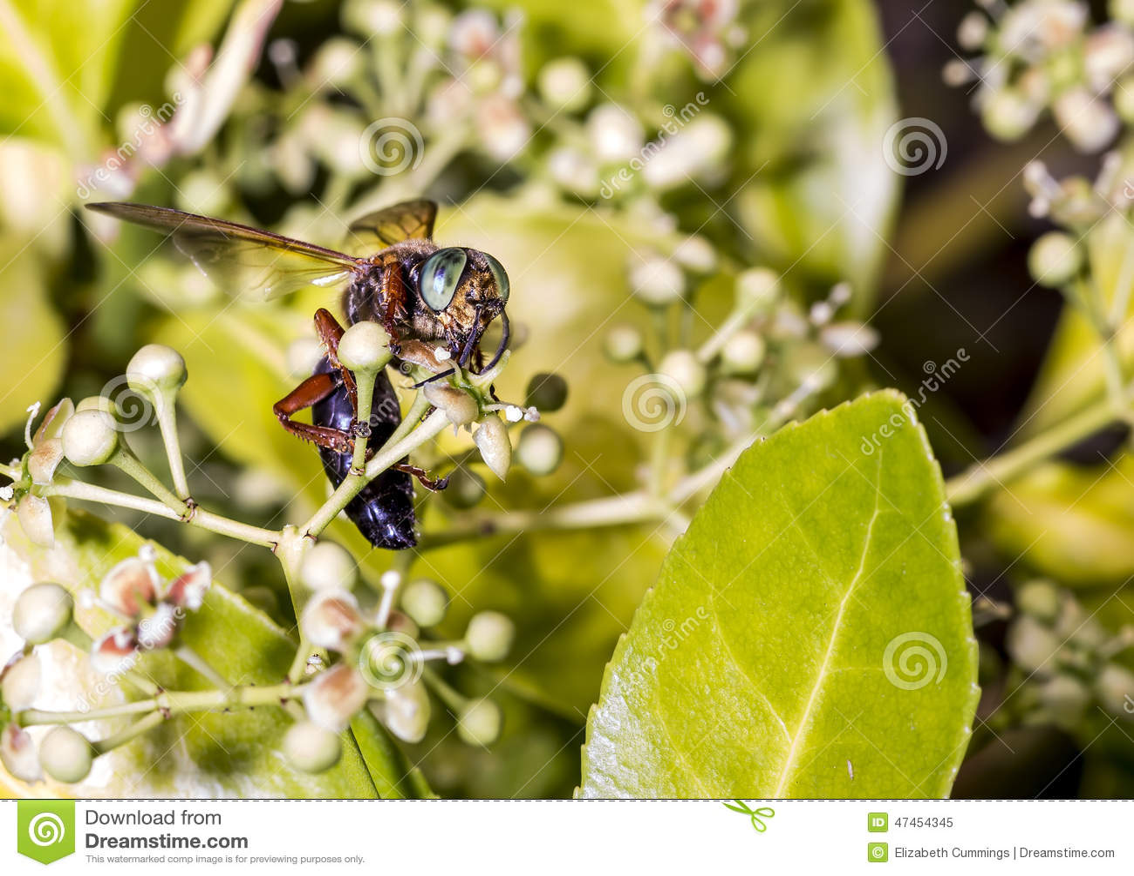 Wasp på en grön buske