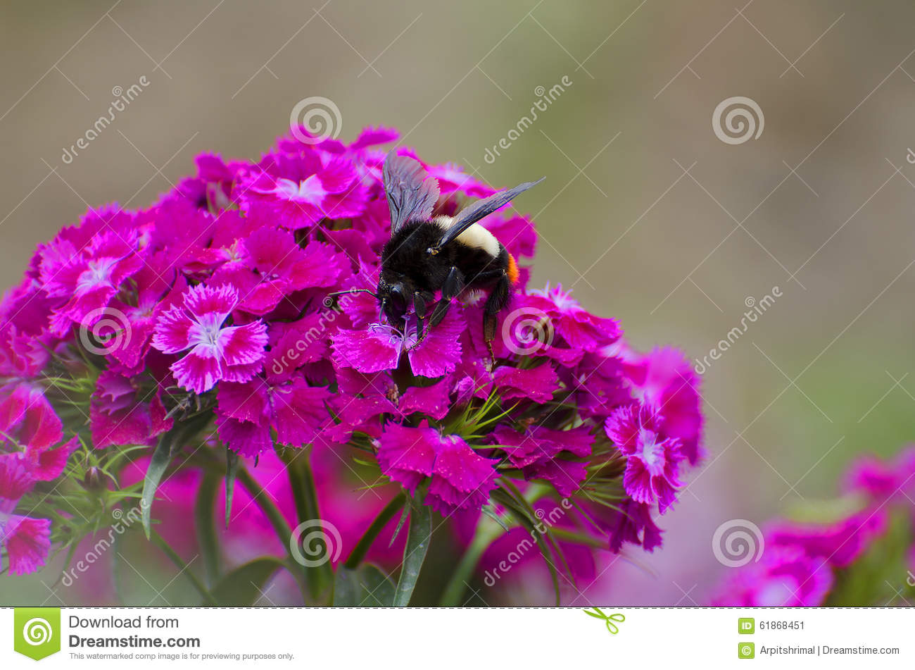 WASP ON RED FLOWERS