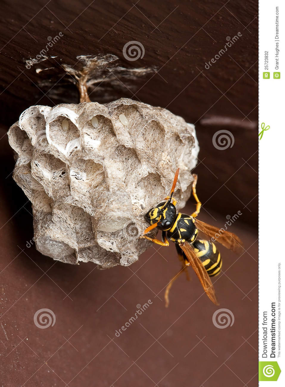 how to make best paper wasps