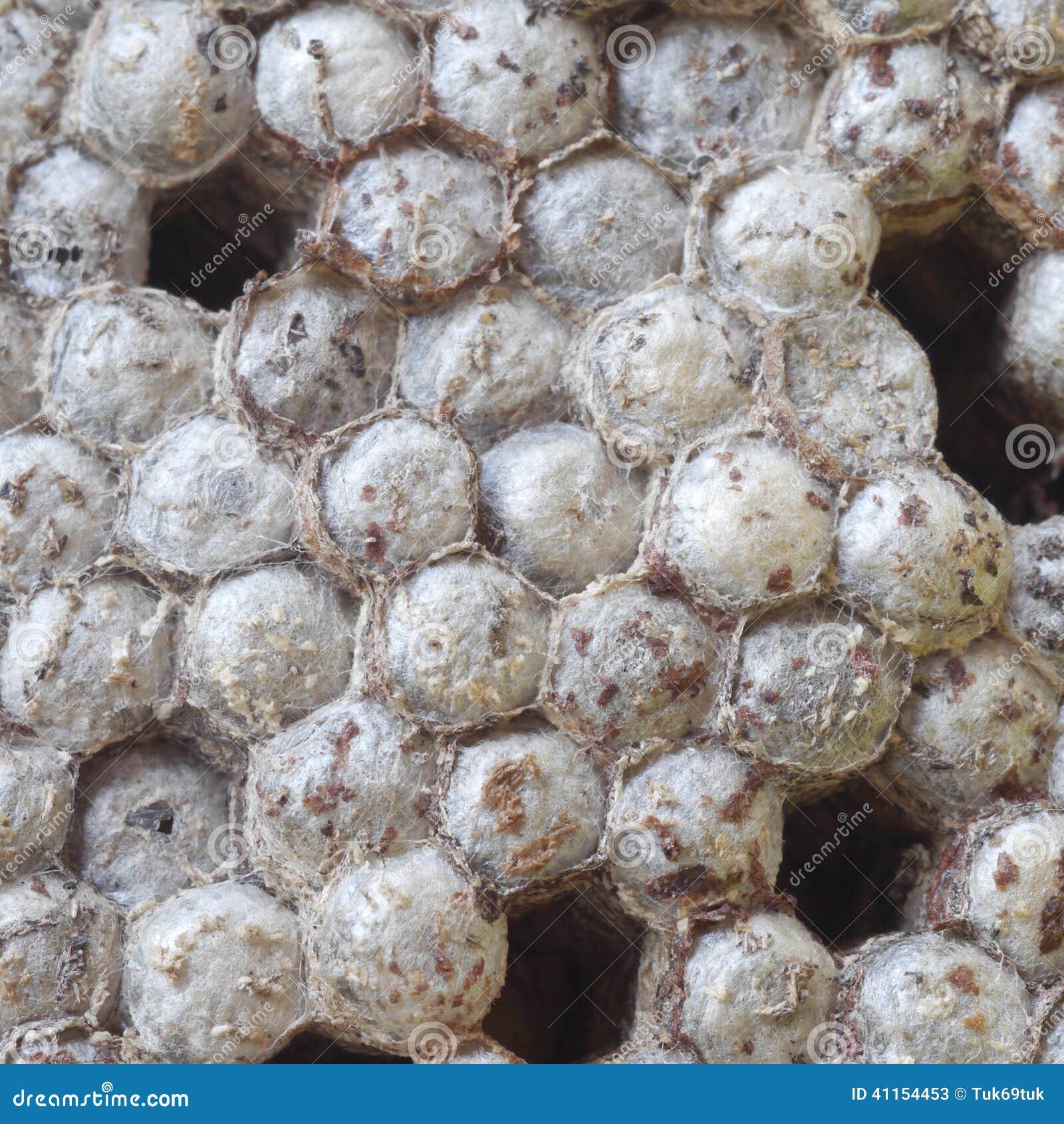 Wasps nest stock image  Image of kids, larvae, house - 41154453