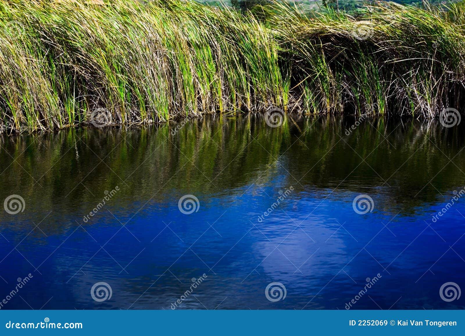 Wasser-Gras 02
