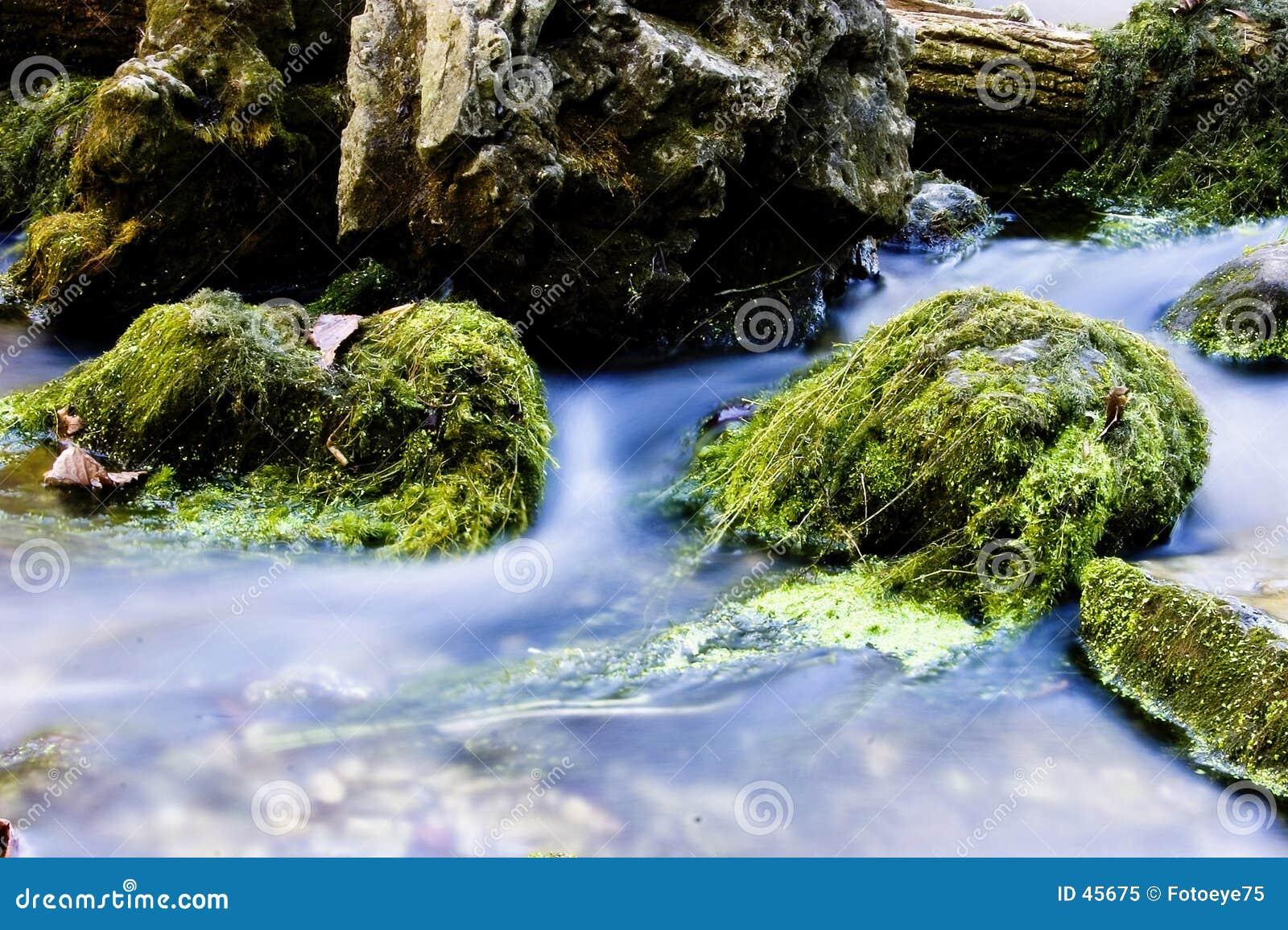Wasser und Moos