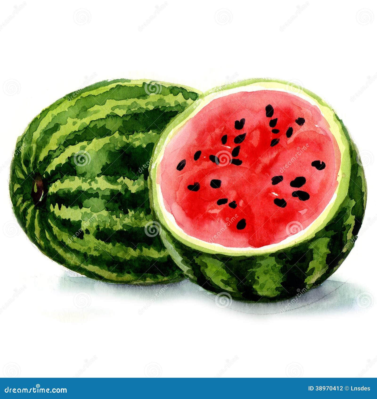Wassermelone. Aquarellillustration