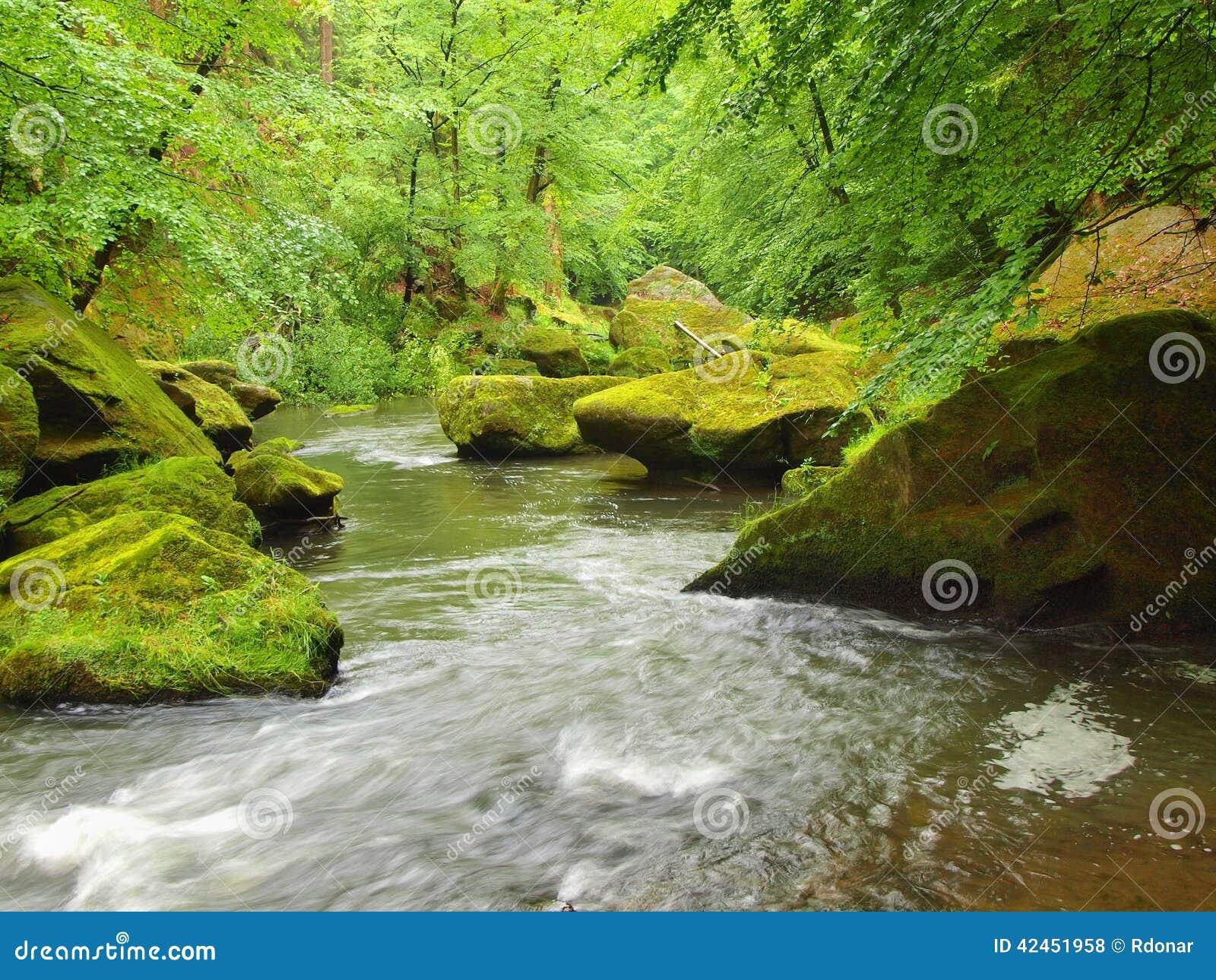 Wasserspiegel unter frischen grünen Bäumen in Gebirgsfluss Frische Frühlingsluft am Abend
