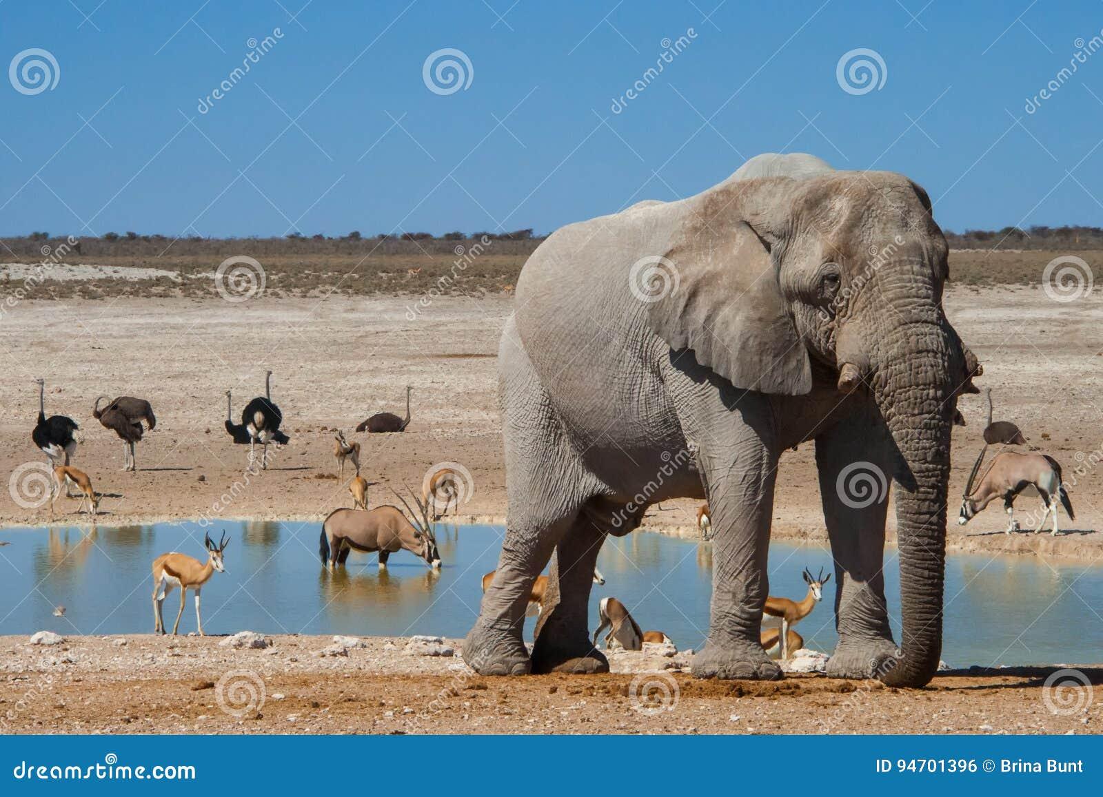 Wasserstelle, Nationalpark Etosha, Namibia