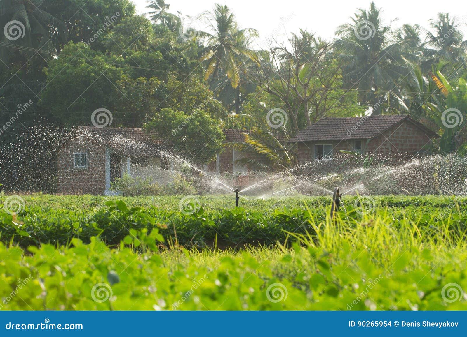 Wasserstrahlen Bewasserungssystem Fur Den Garten Stockfoto Bild