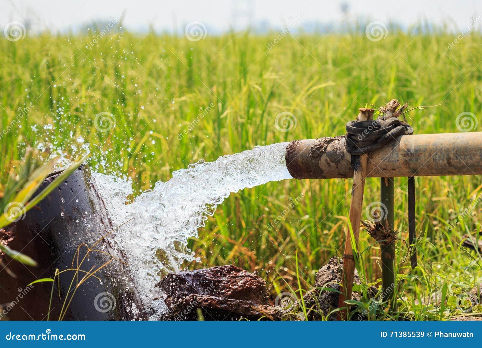 Wasserstrom vom großen Pumpenrohr auf dem Reisgebiet in der Zentrale von thailändischem