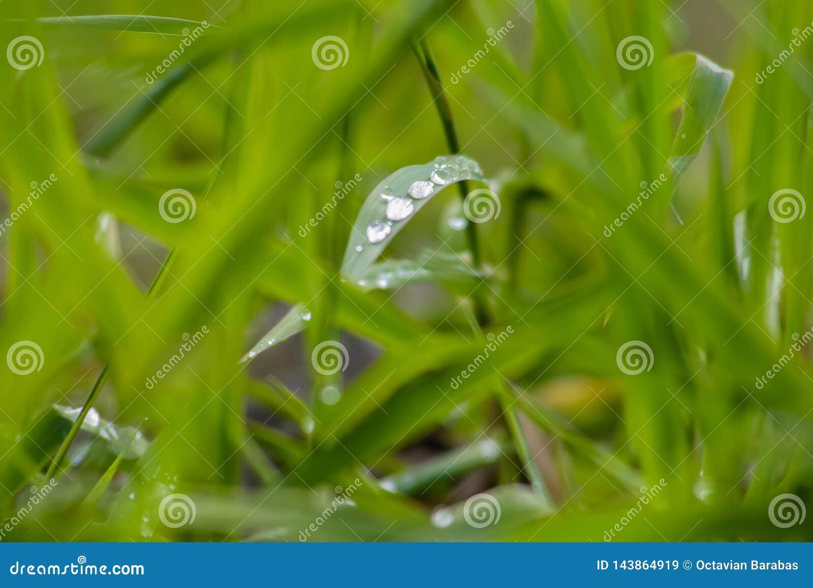Wassertropfen auf grünem Gras