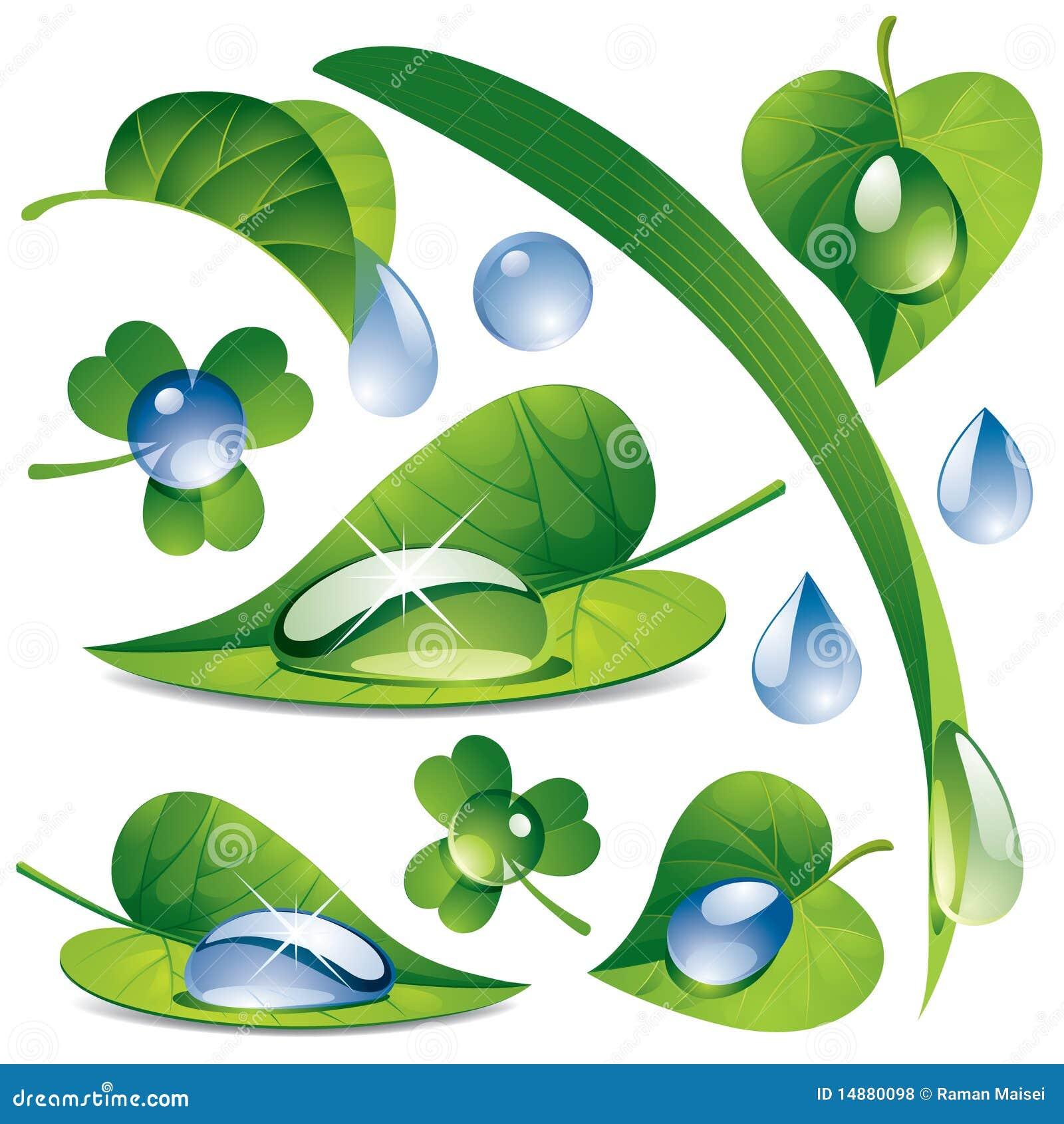 Wassertropfen mit Blätter