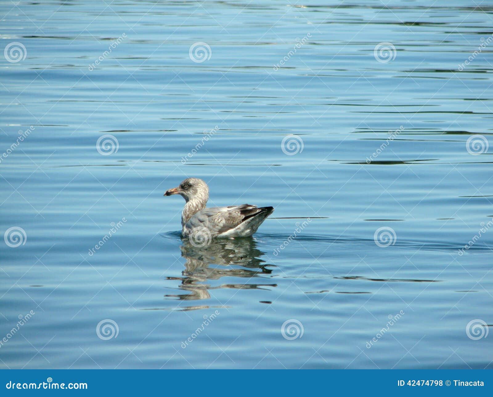 Wasservogel im Atlantik