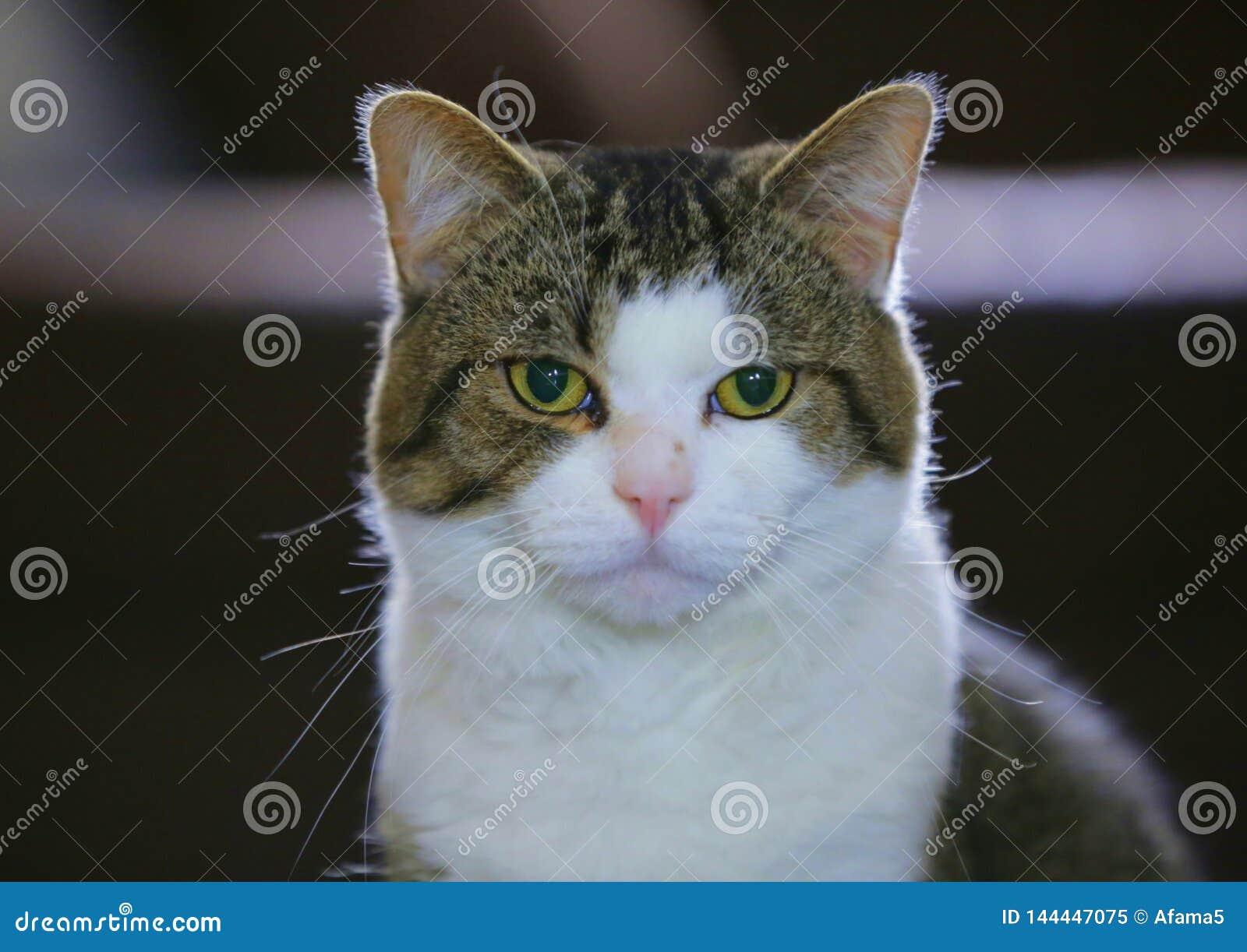 Wat willen deze kattenogen u vertellen?