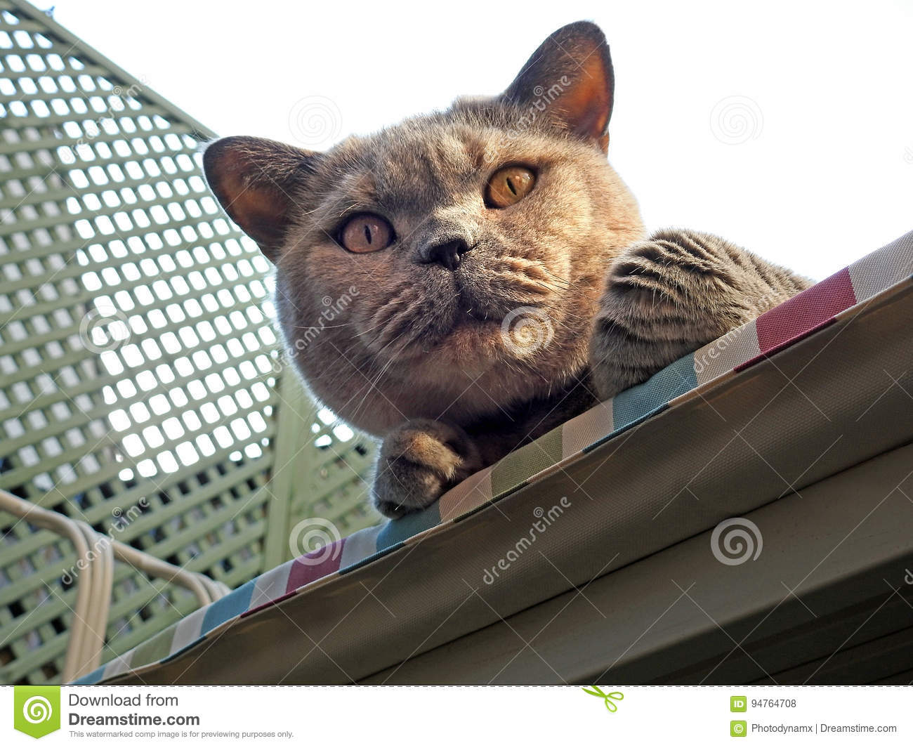 Pleasing Watchful Pedigree Cat Stock Photo Image Of Garden Animals Inzonedesignstudio Interior Chair Design Inzonedesignstudiocom