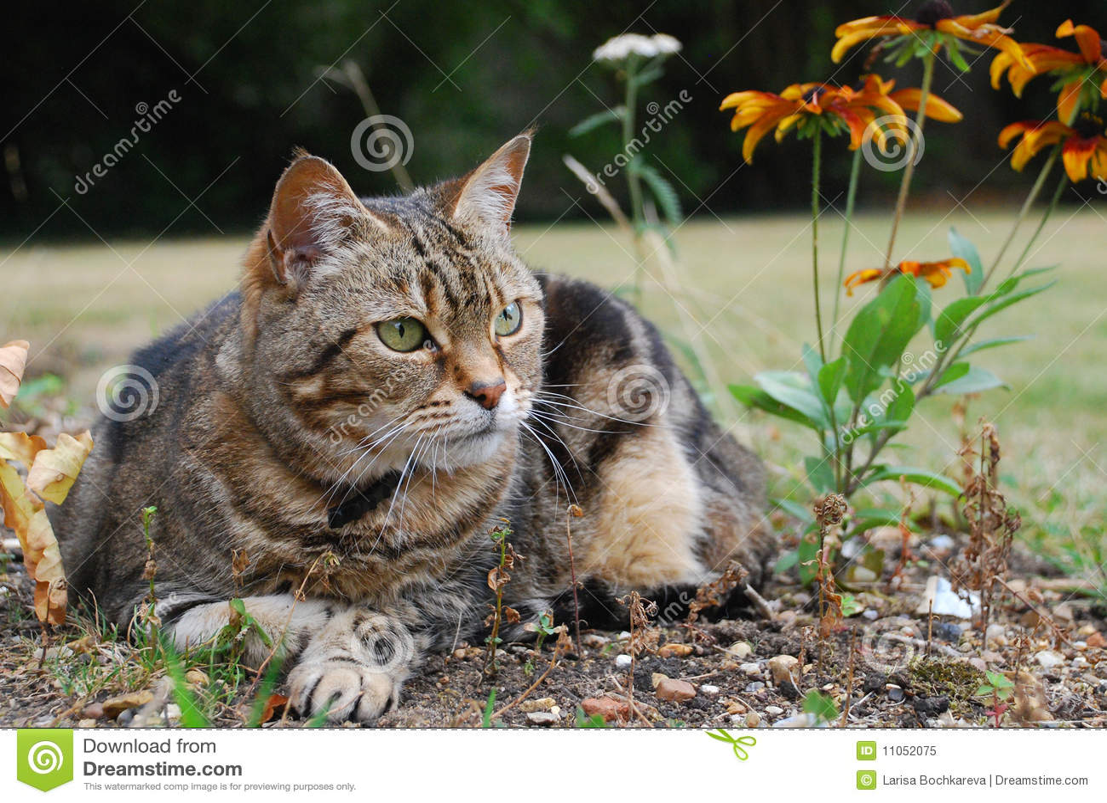 Watching Cat Close