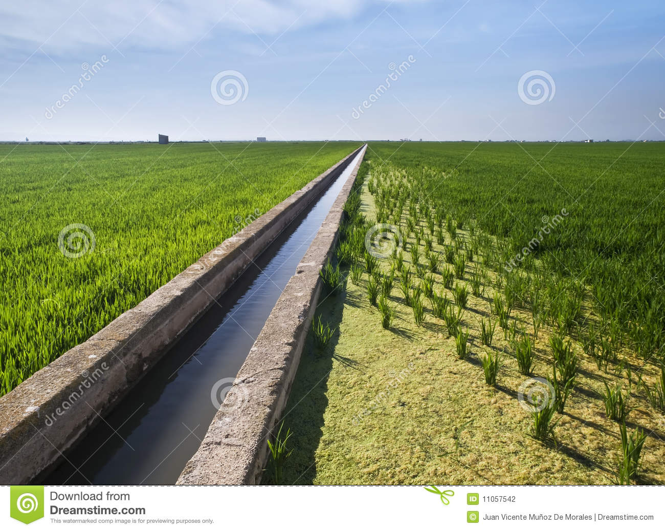 Water Canal Between Paddy Fields Stock Photo Image Of