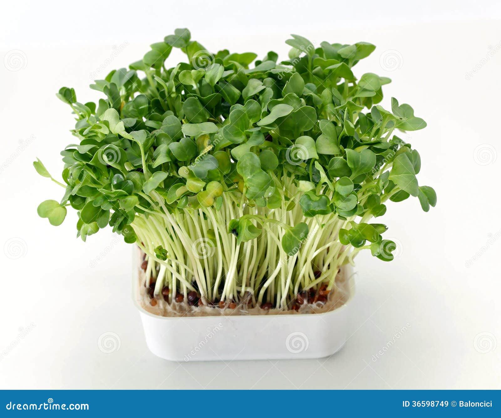 salad business plan