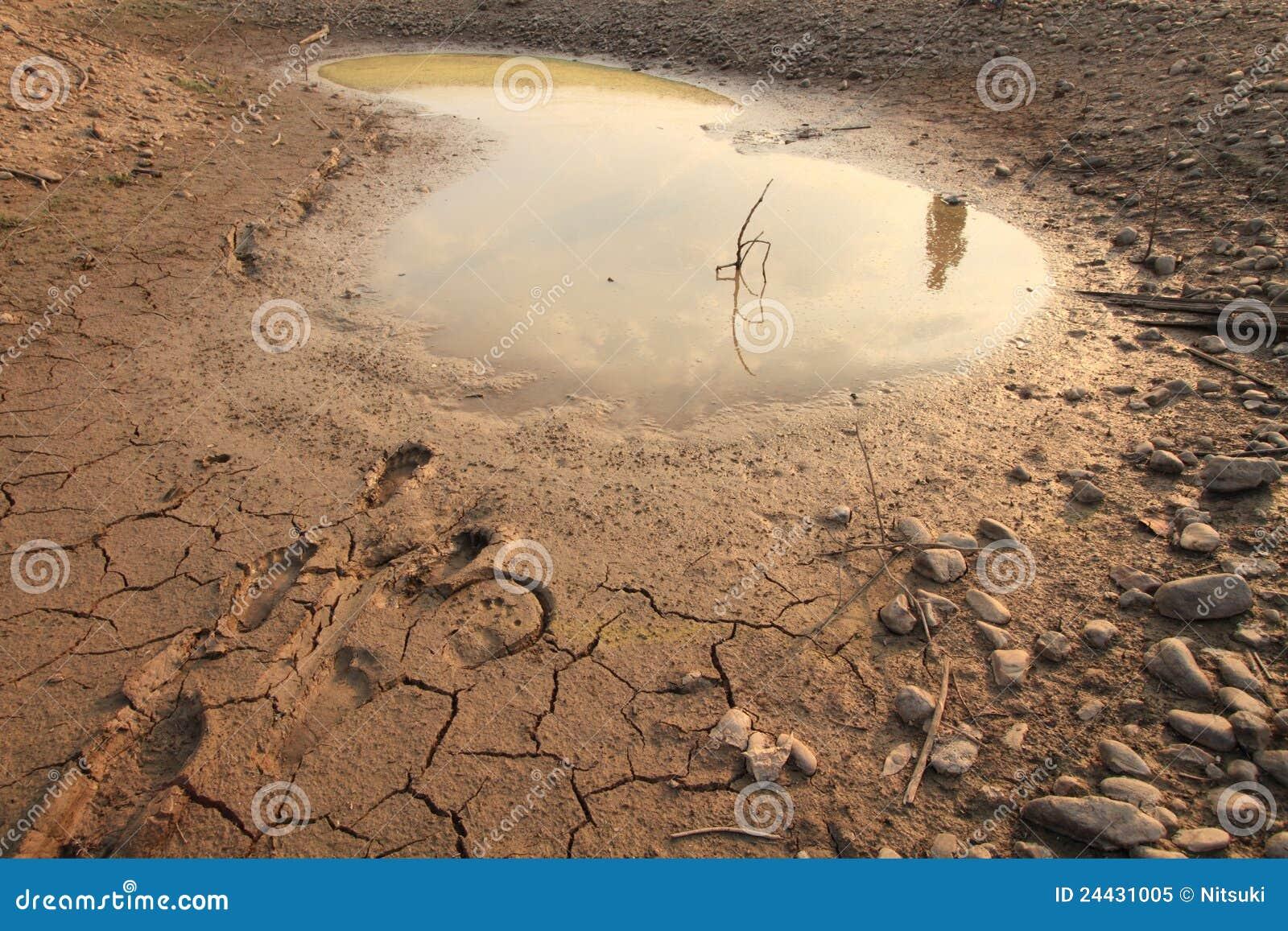 Water Crisis Royalty F...