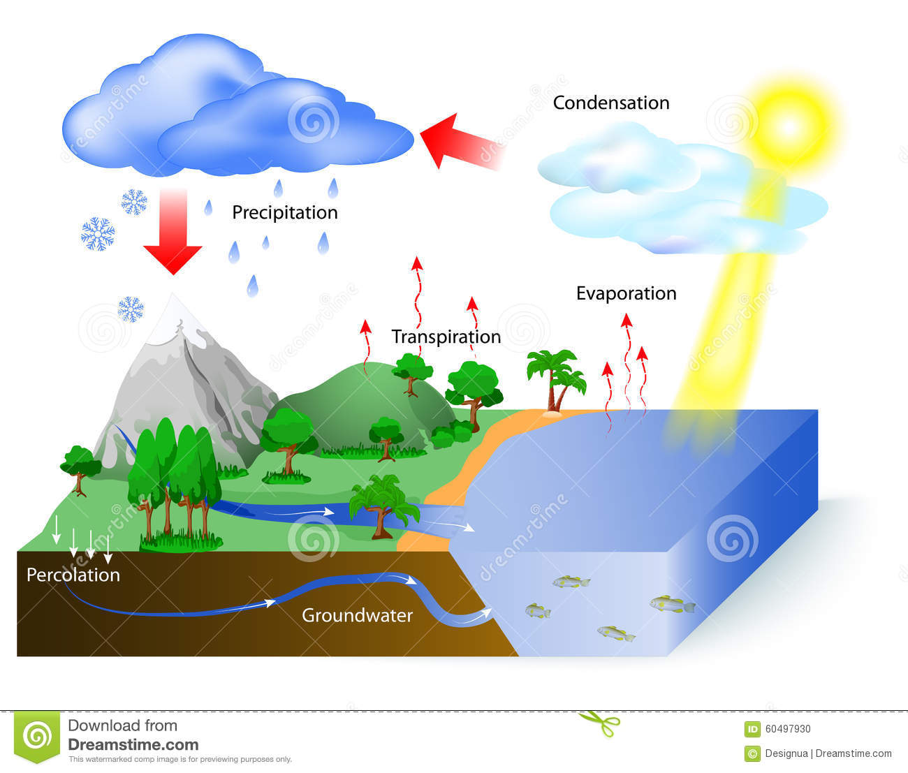 Water Cycle Stock Vector  Image Of Flow  Explicative