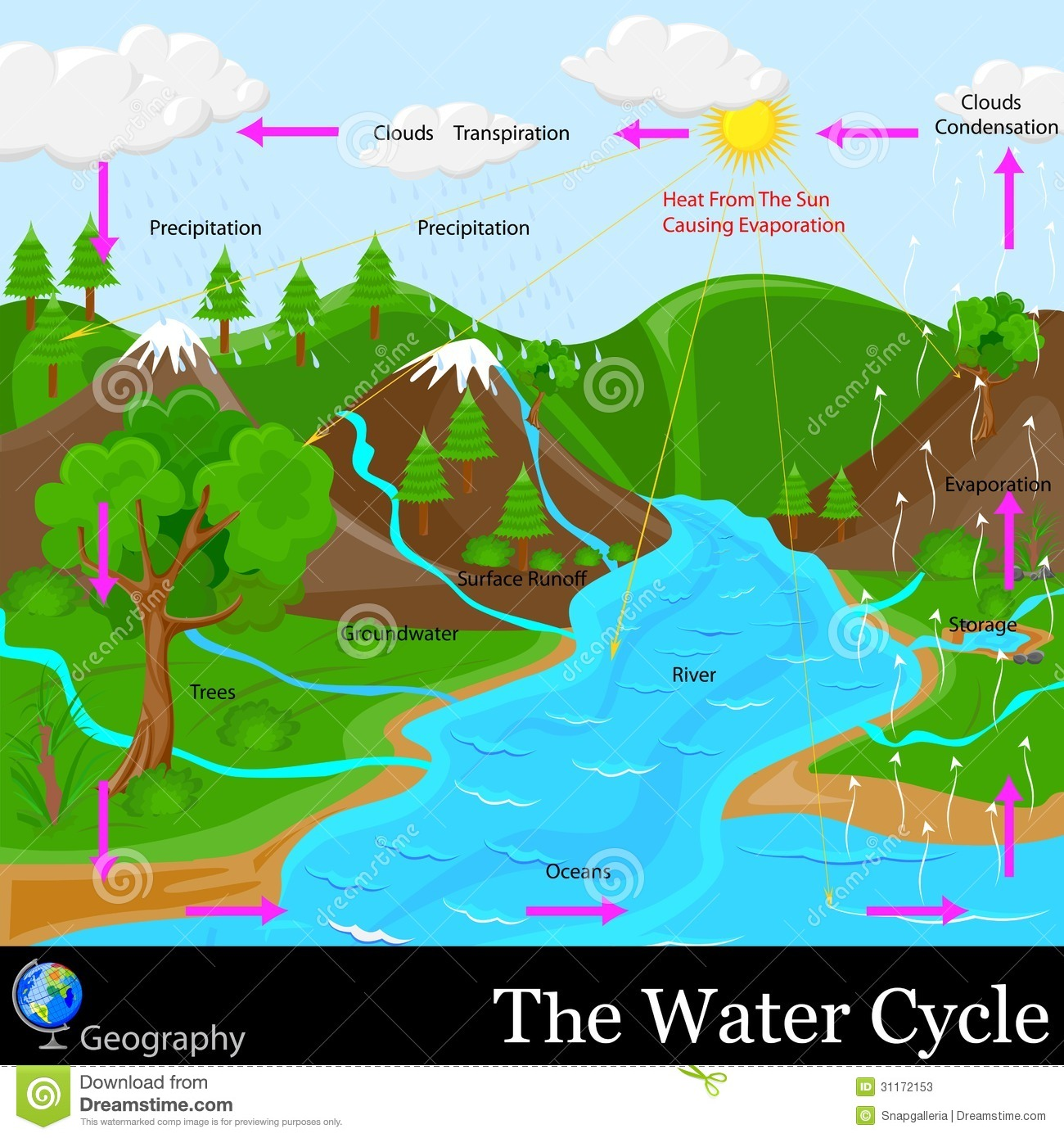 Water Cycle Stock Vector Illustration Of Hydrological